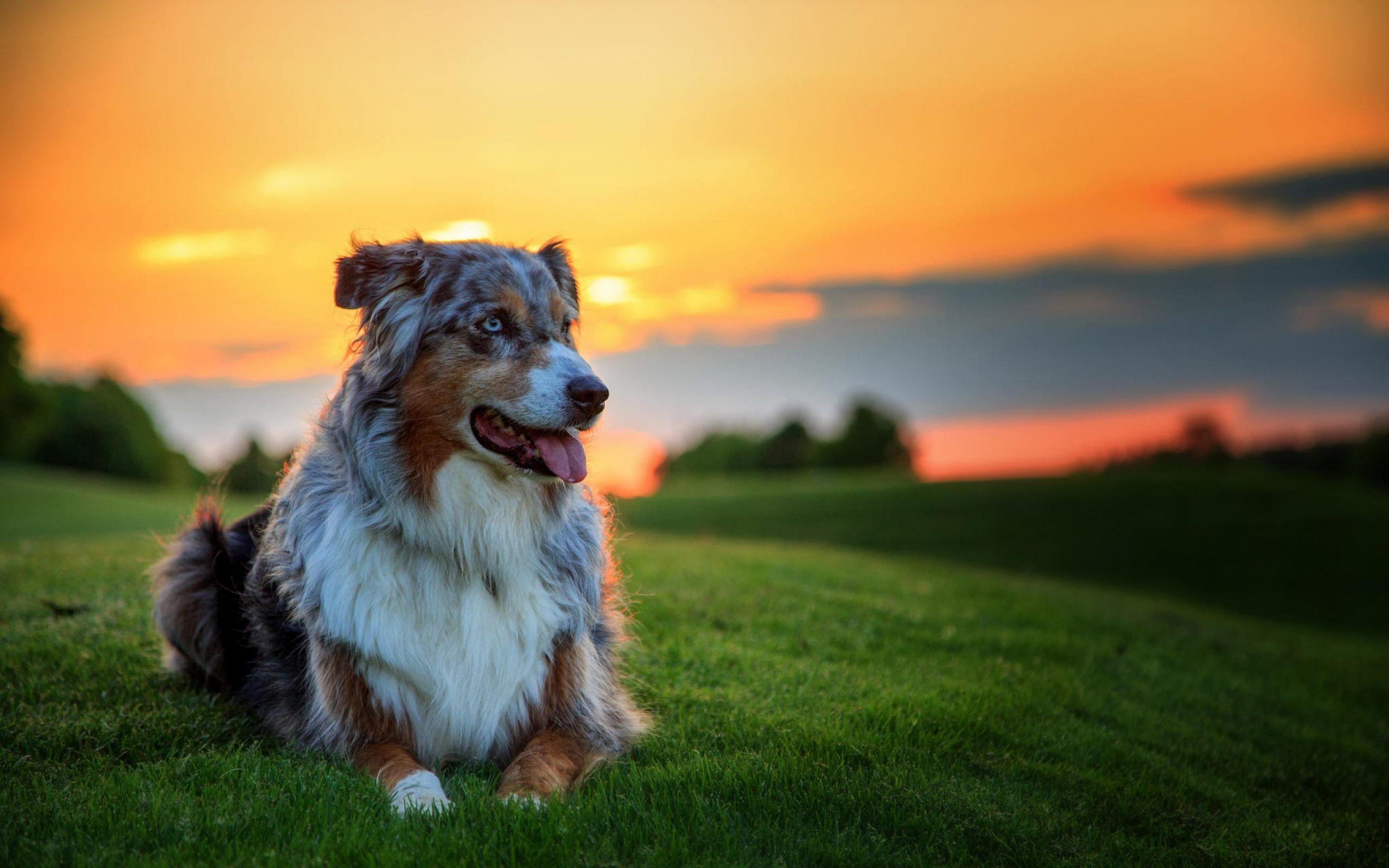 All Dogs Wallpapers Wallpaper Cave