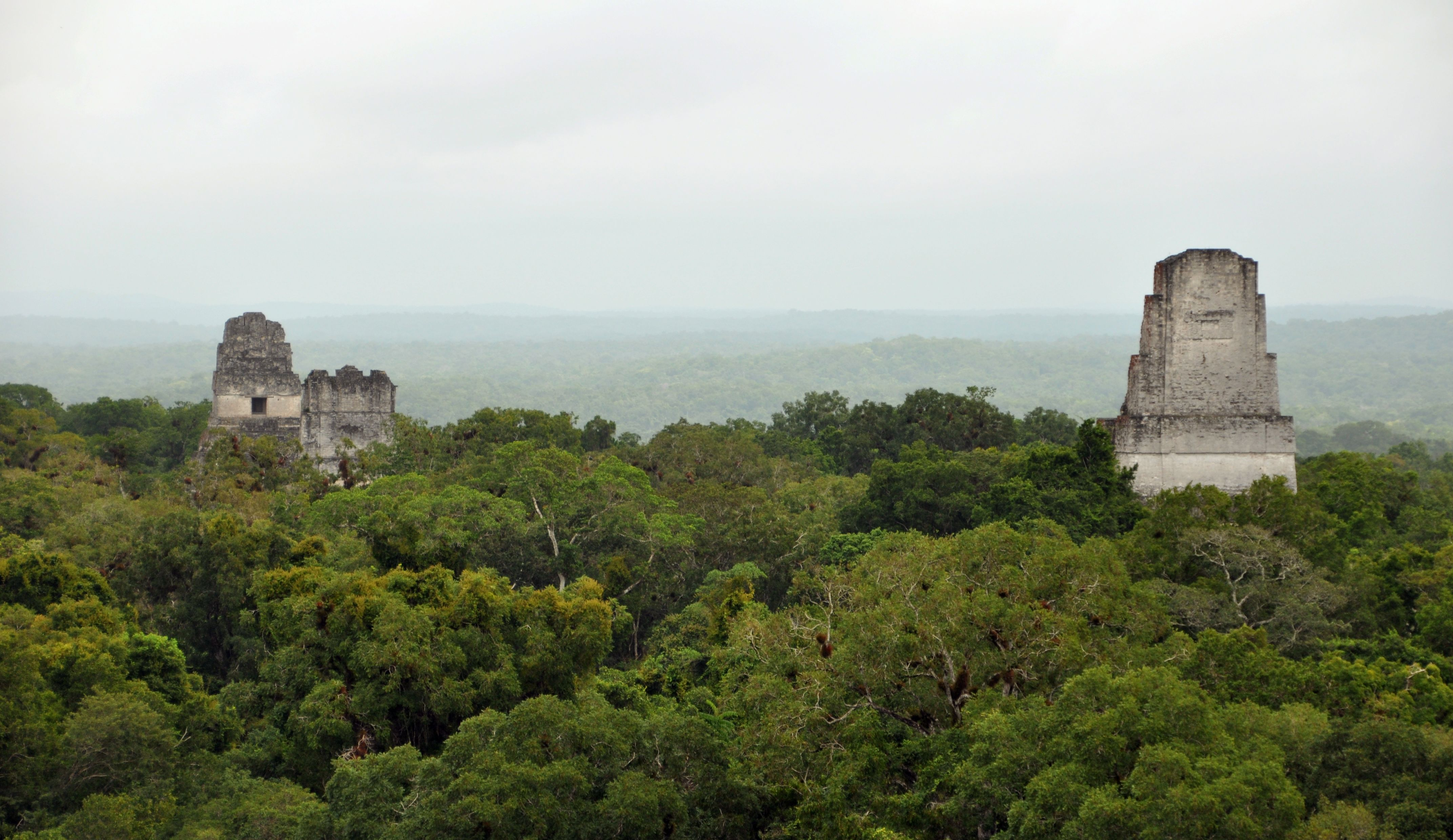 tikal from the starwars movie | Starwars/the movies | Pinterest ...