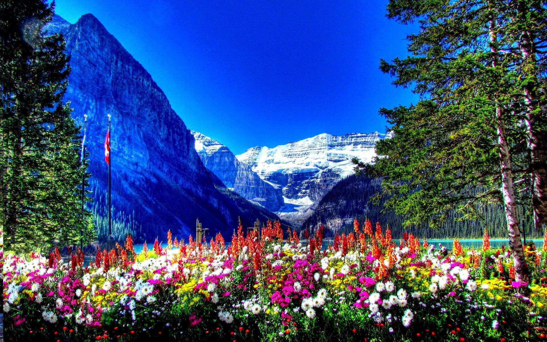 Amusement Parks: BANFF NATIONAL PARK CANADA Flowers Mountains Full