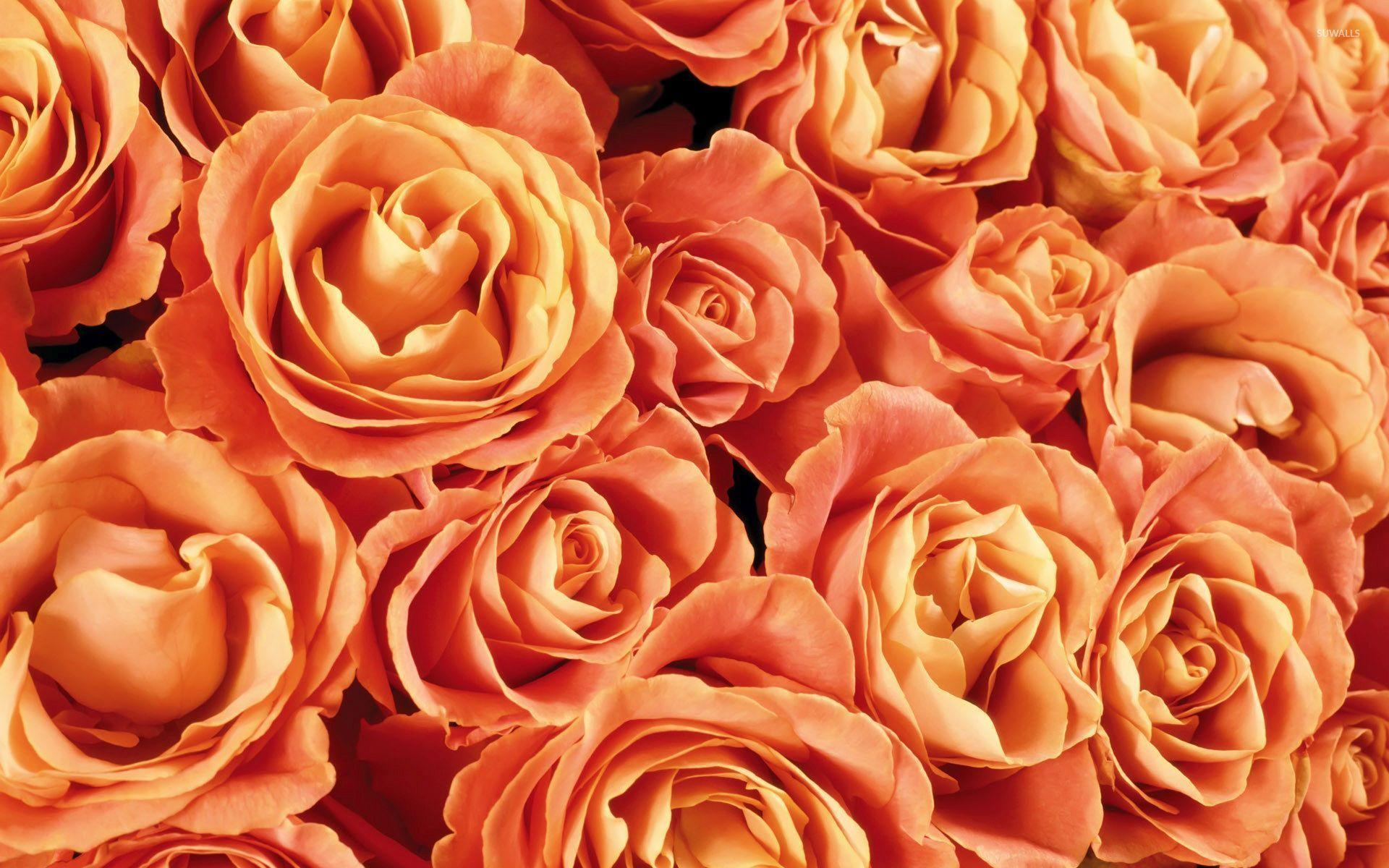 Orange Roses Wallpapers - Wallpaper Cave