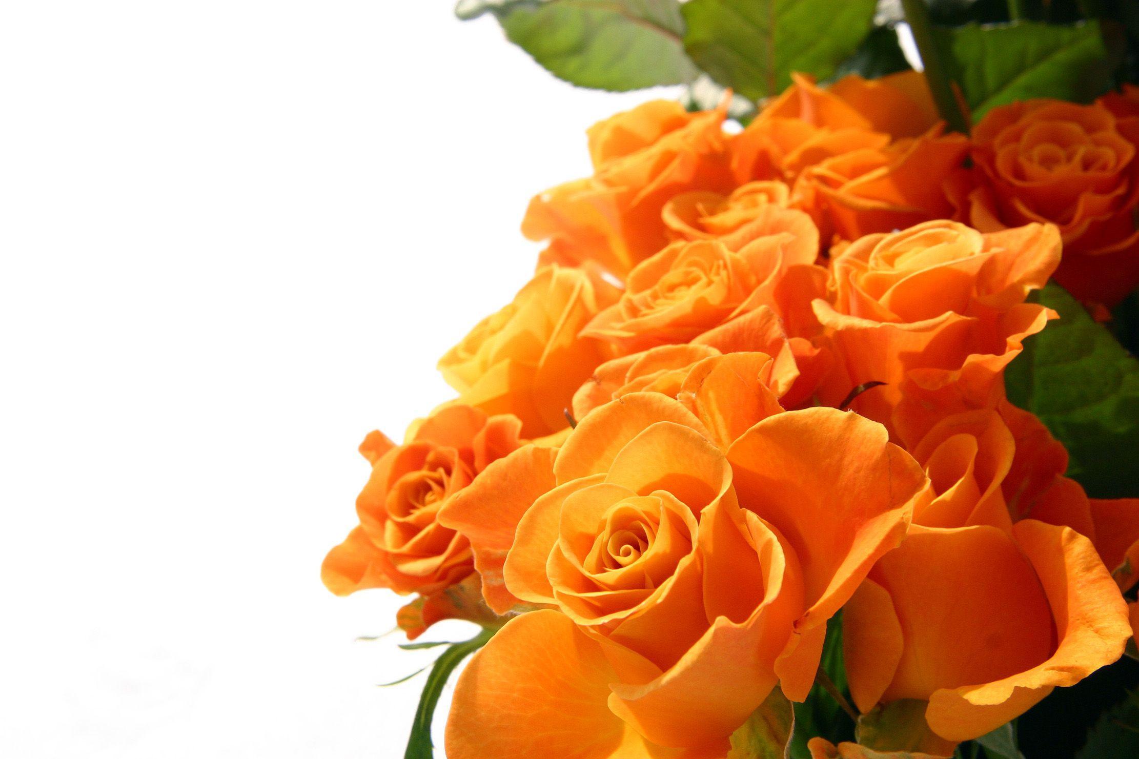 Orange Roses Wallpapers Wallpaper Cave