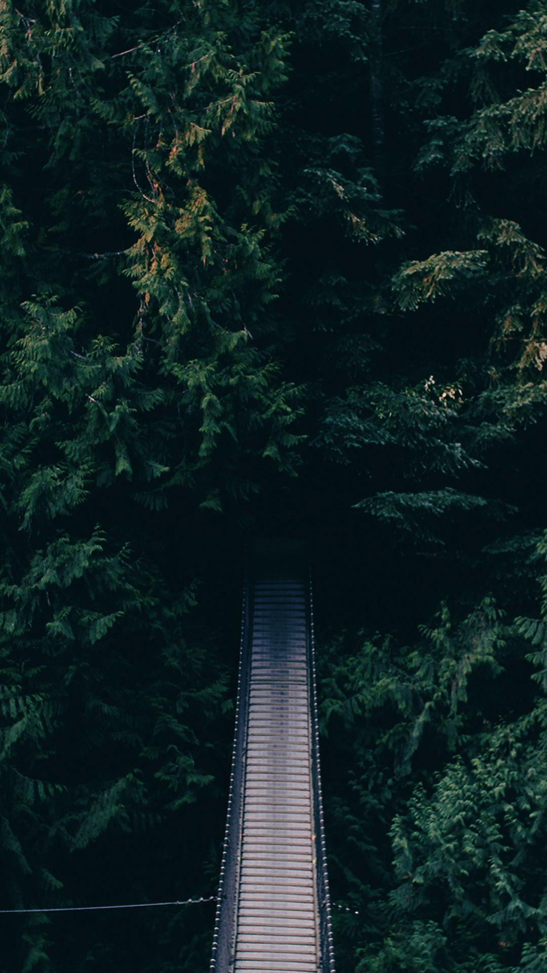Dense Green Forest Bridge Android Wallpapers free download