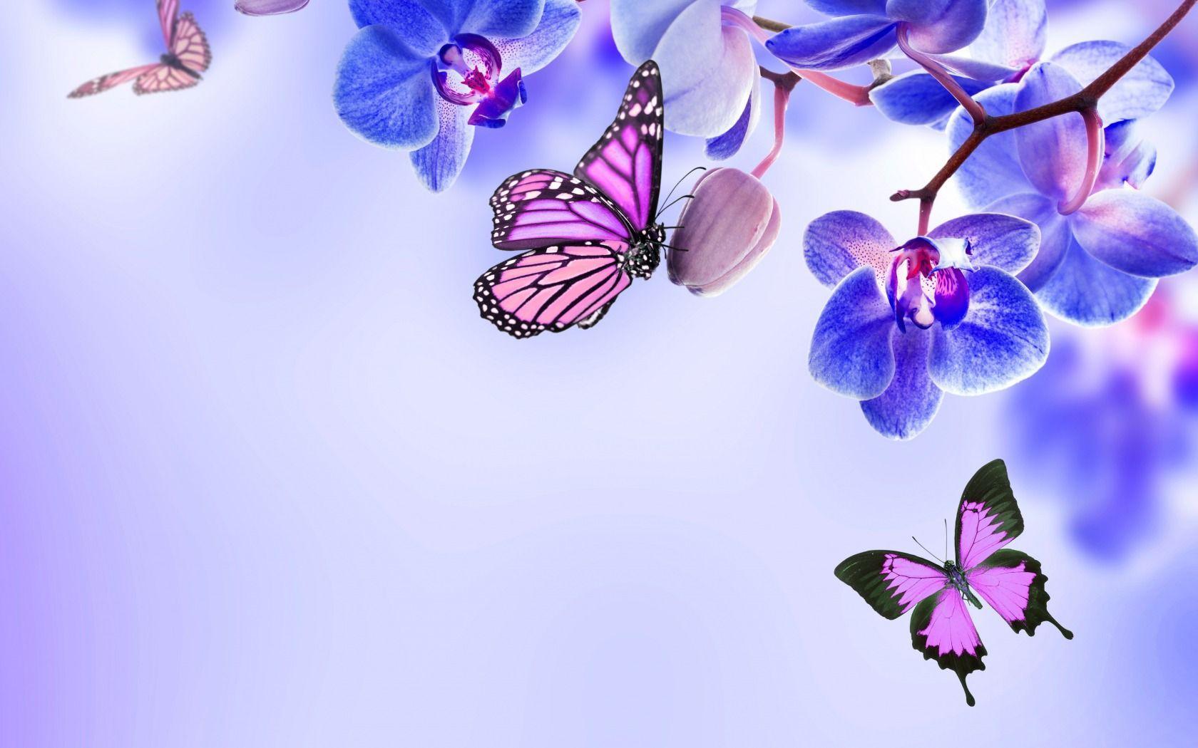 Beautiful Butterflies Wallpapers - Wallpaper Cave