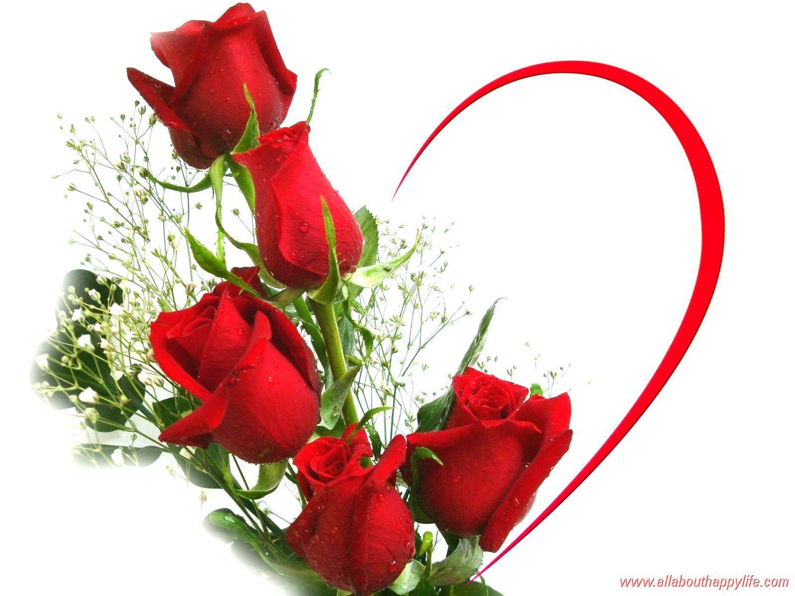 Free Wallpapers Red Rose Love Single Wallpaper Cave