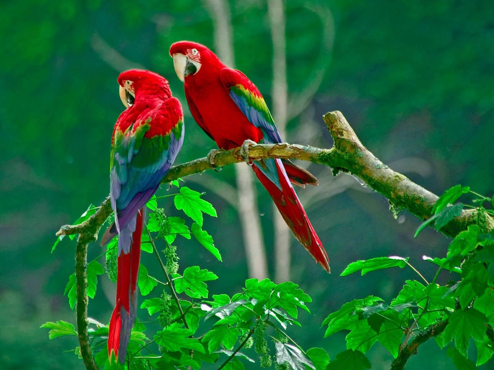 beautiful wallpapers of love birds - wallpaper cave