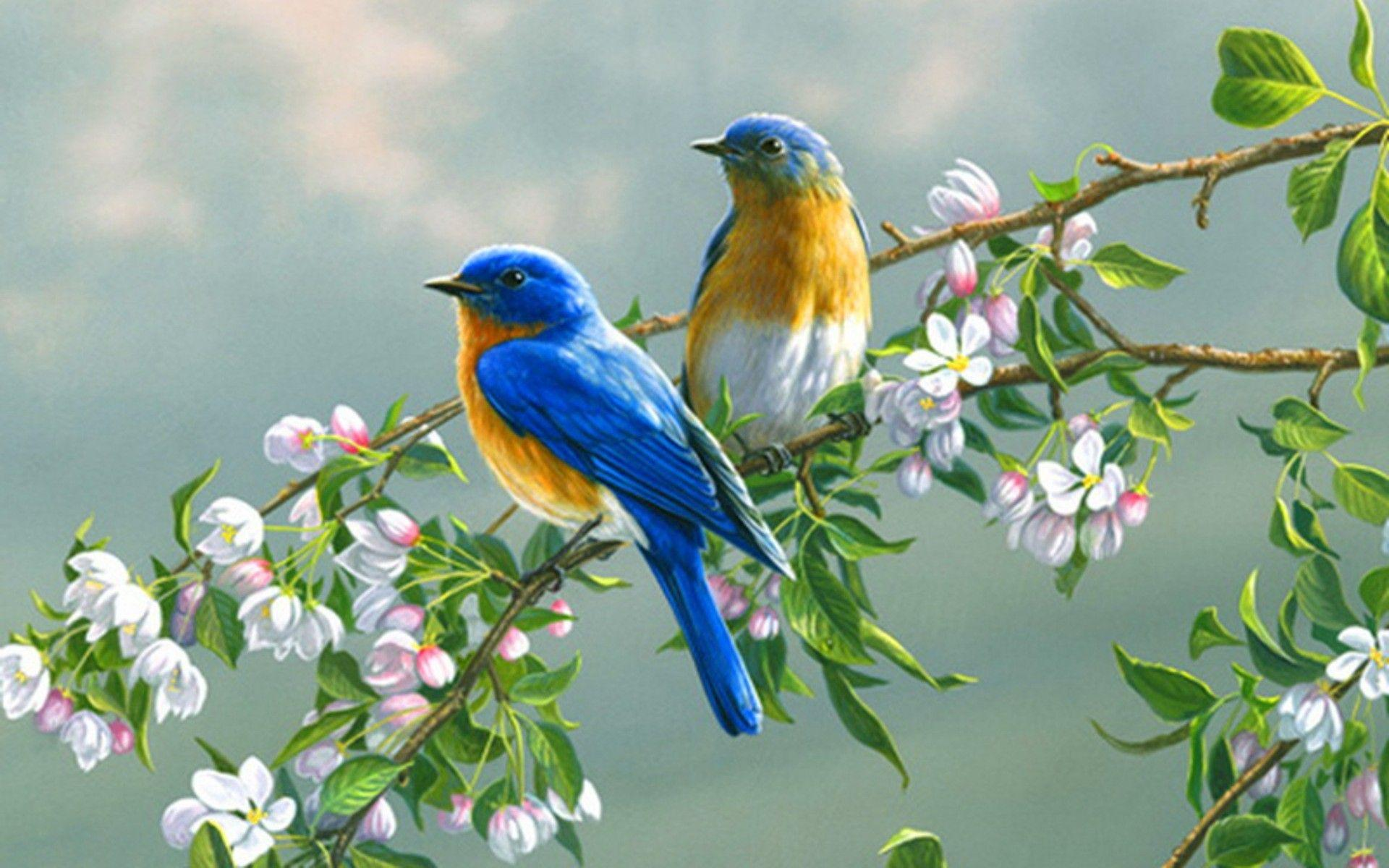Beautiful Wallpapers Of Love Birds Wallpaper Cave