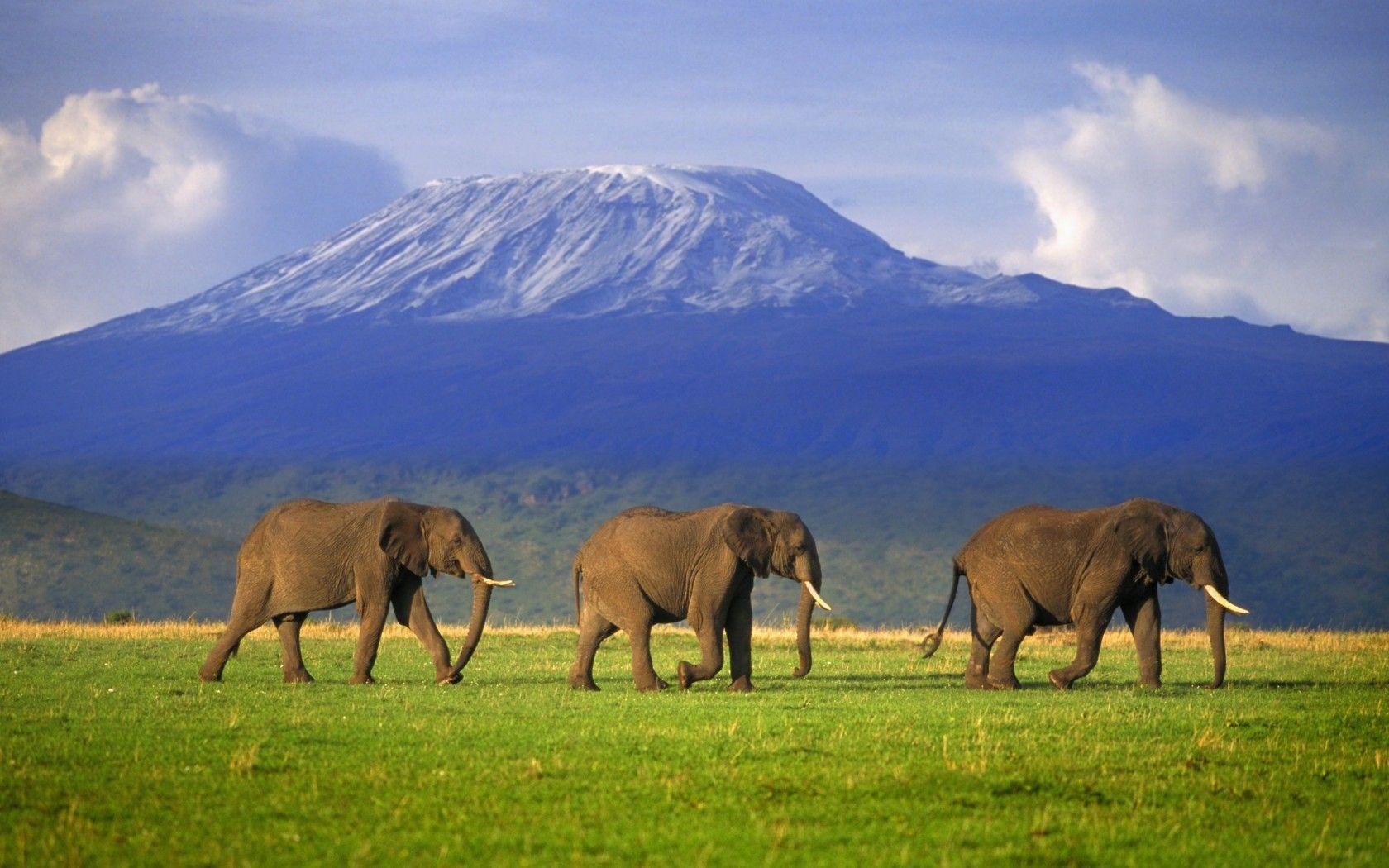 MOUNT KILIMANJARO: my daughter's goal is to climb this some day