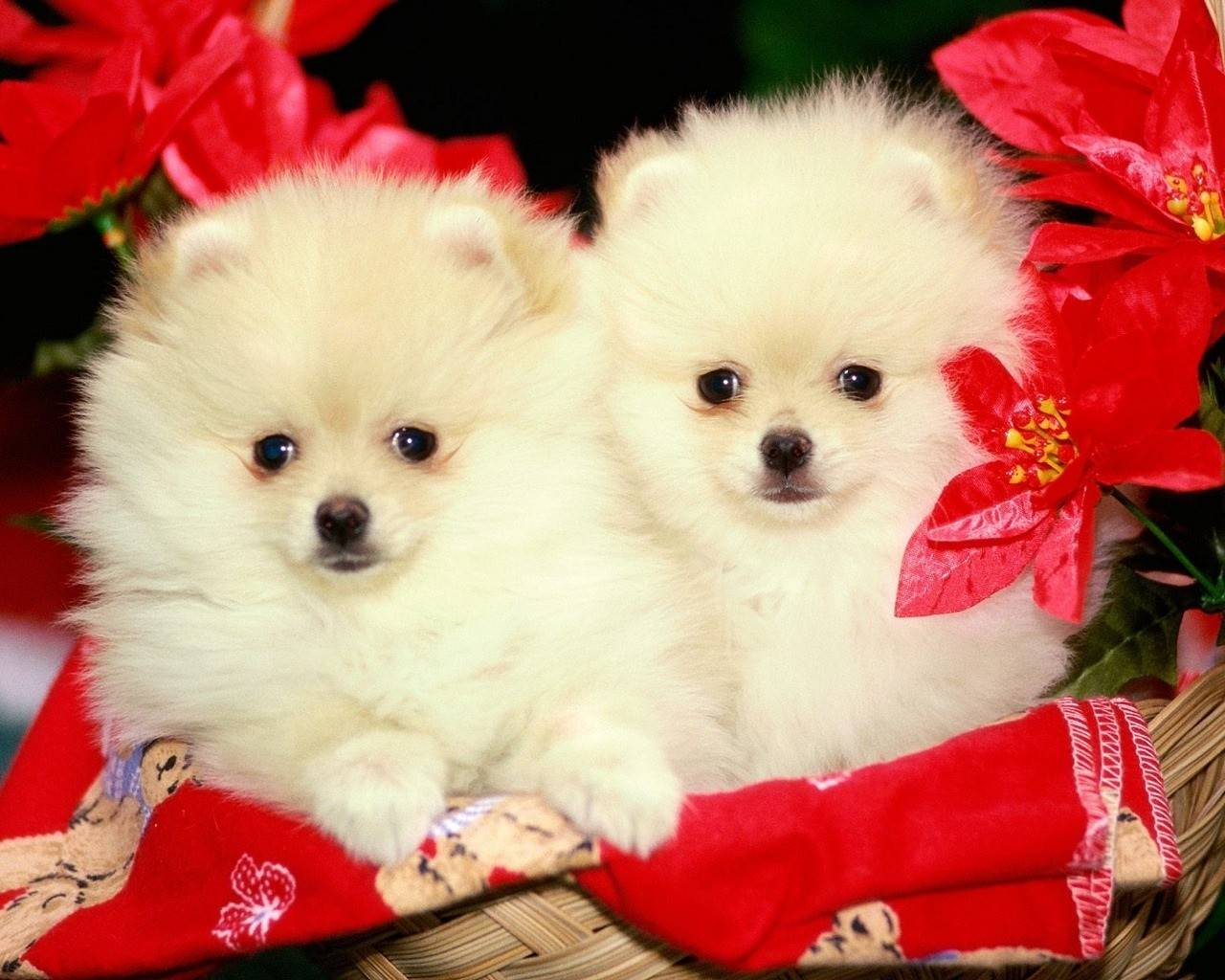 Cute Animal Wallpapers For Desktop Background Full Screen Awesome