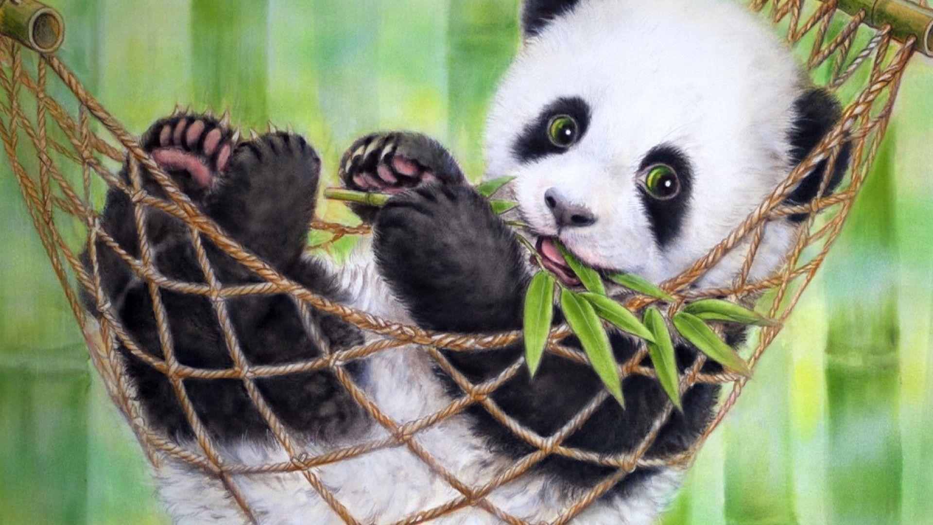 Cute Baby Panda Pics: Cute Baby Pandas Wallpapers