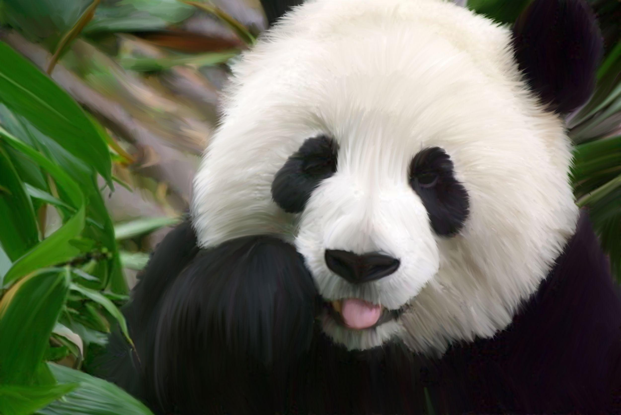 Cute Baby Panda Wallpapers Wallpaper Cave