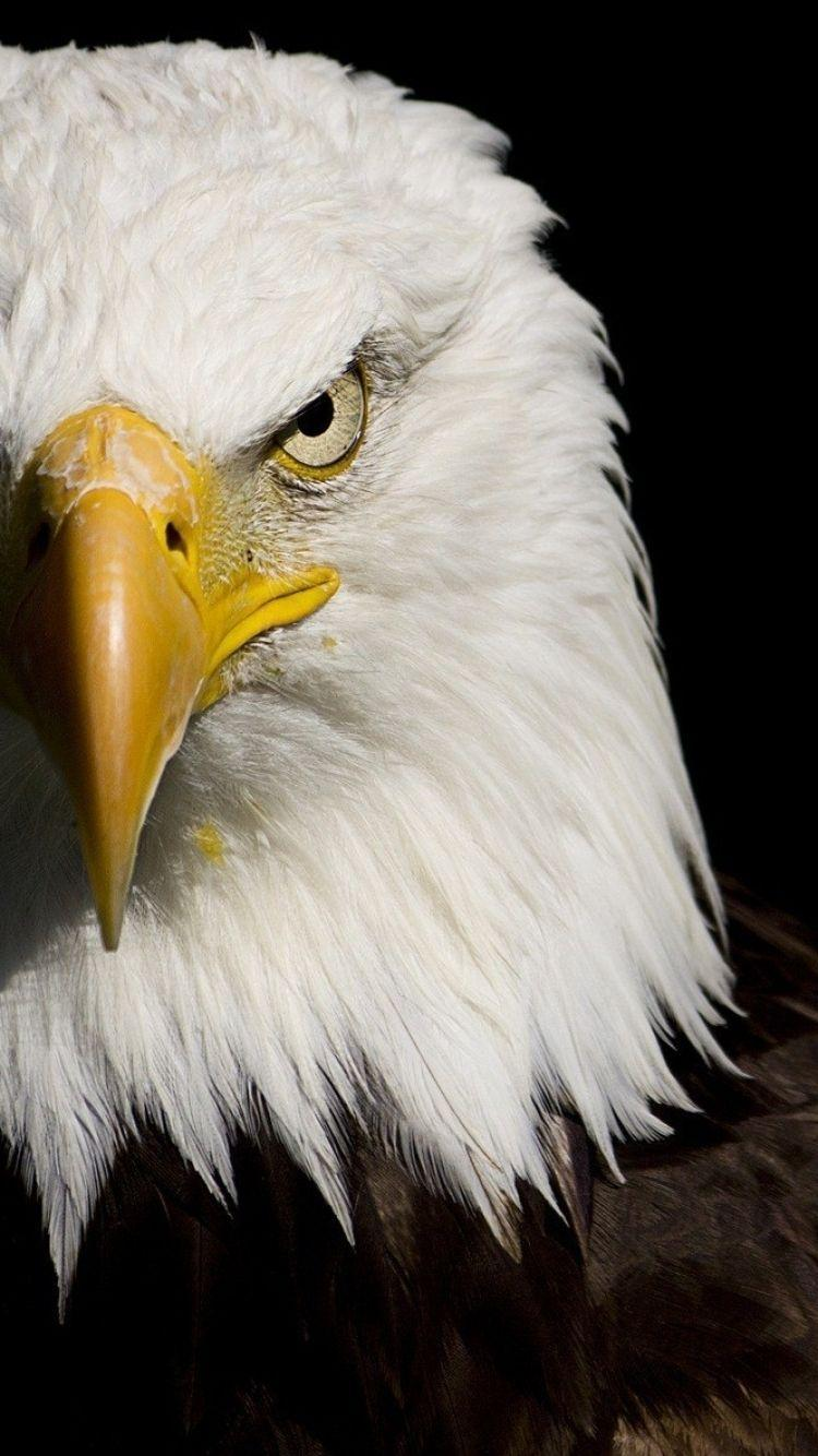 American Eagle Wallpapers Wallpaper Cave