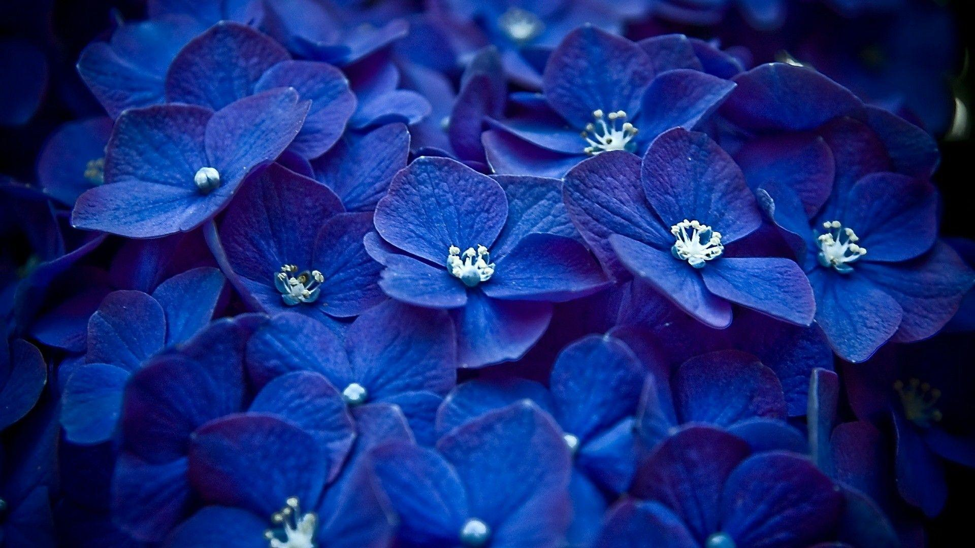 Hd Wallpapers For Pc Full Screen Flower Wallpaper Cave