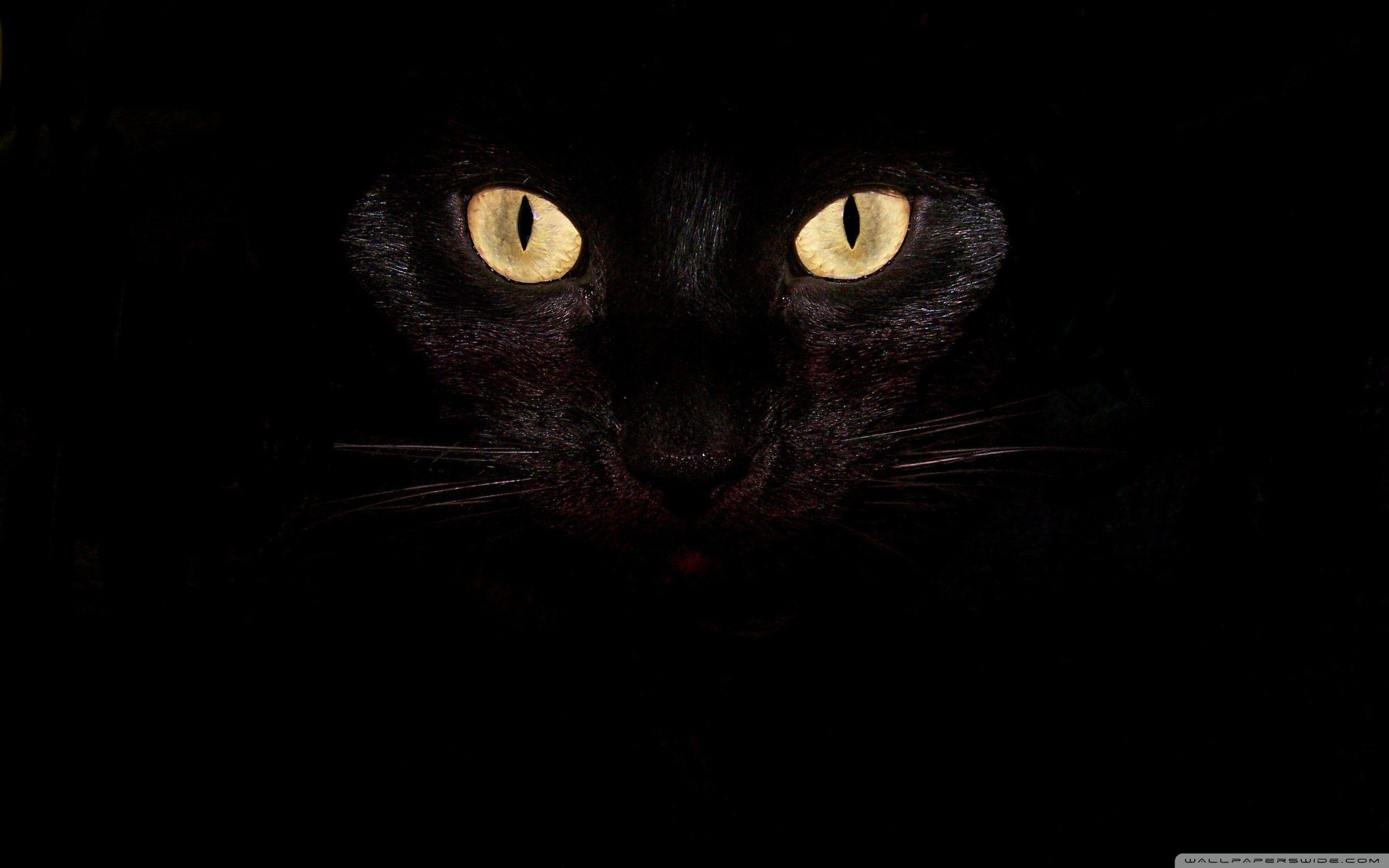Cat Eyes Wallpapers Wallpaper Cave