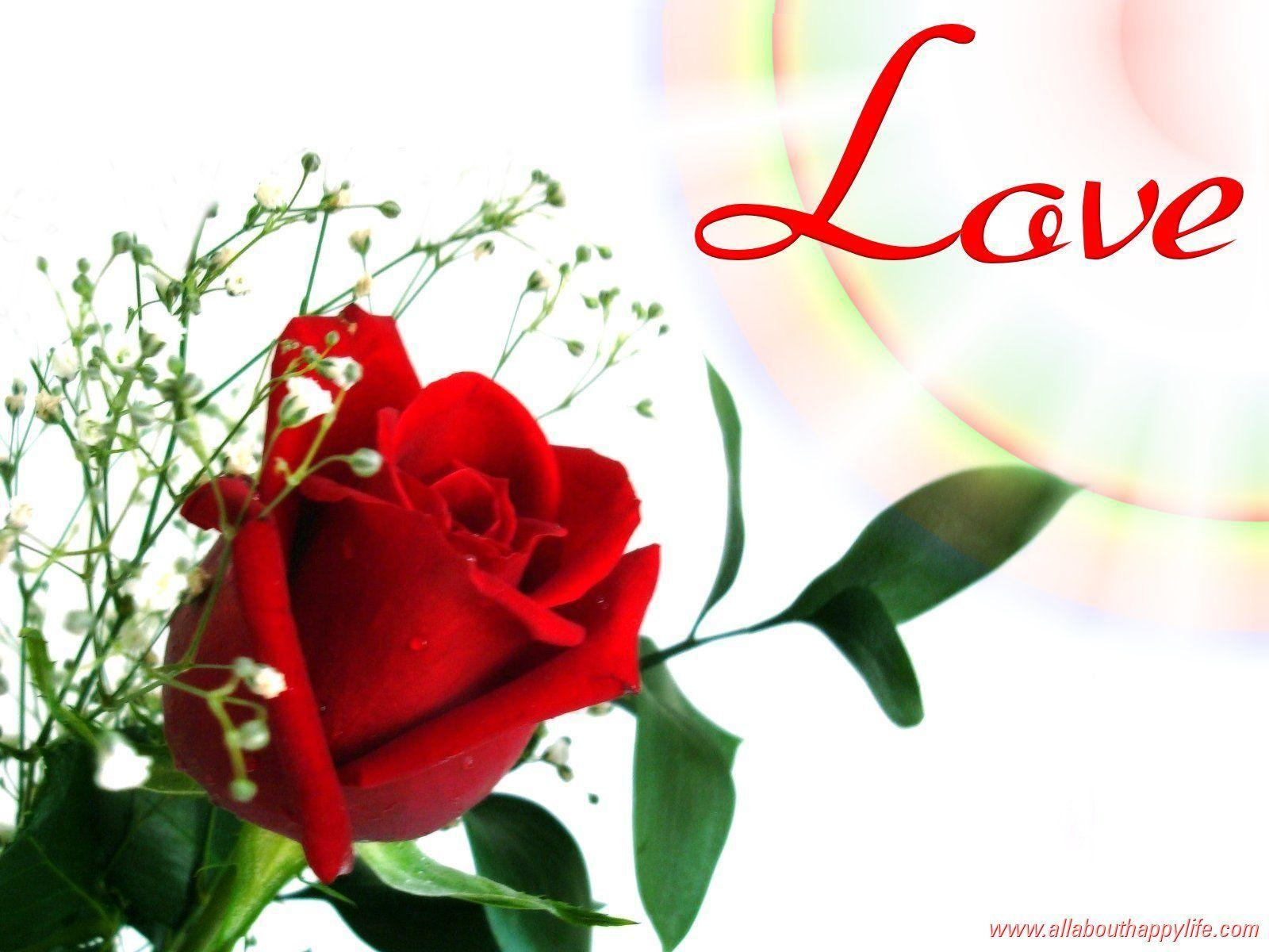Red Rose Love Wallpapers - Wallpaper Cave | Best Games Wallpapers .