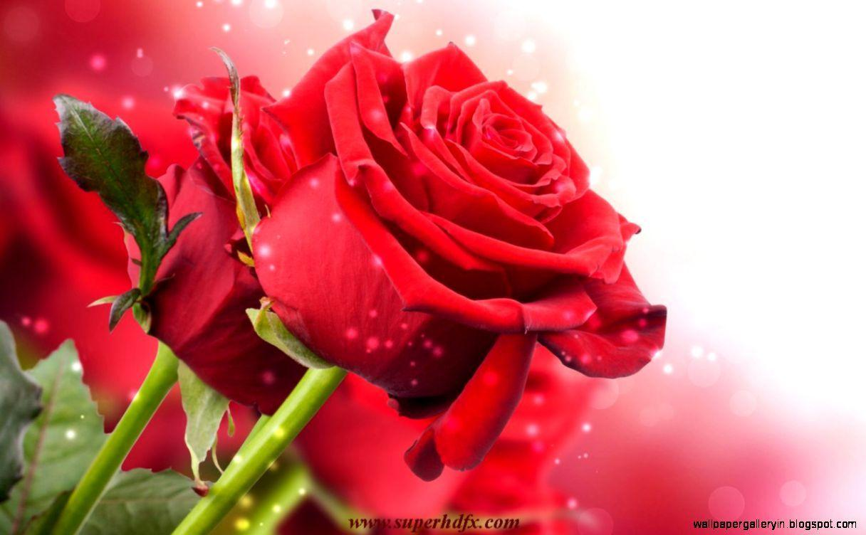 Red Rose Love Wallpapers Hd Wallpaper Cave