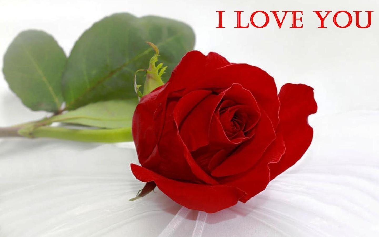 Red Rose Wallpapers For Love Wallpaper Cave