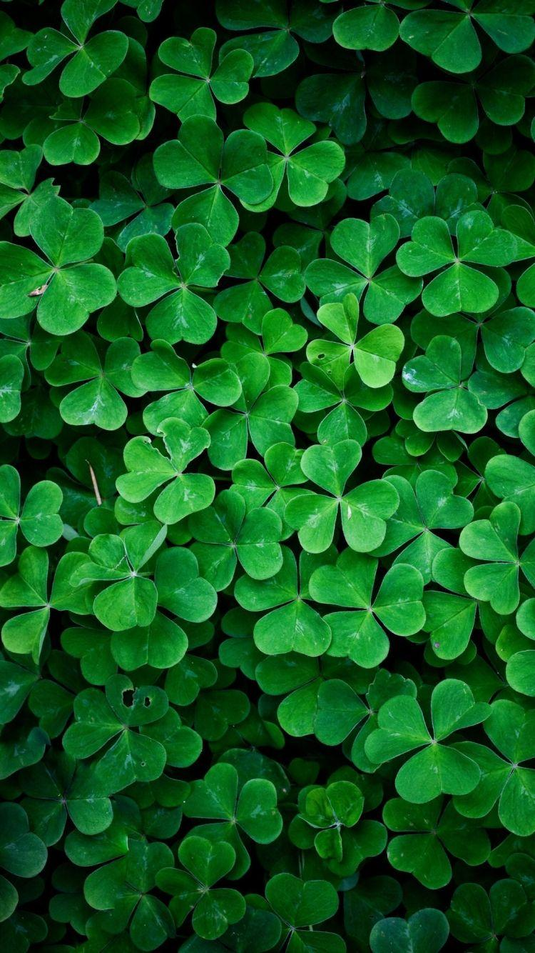Lucky Clover iPhone 6 Wallpapers HD