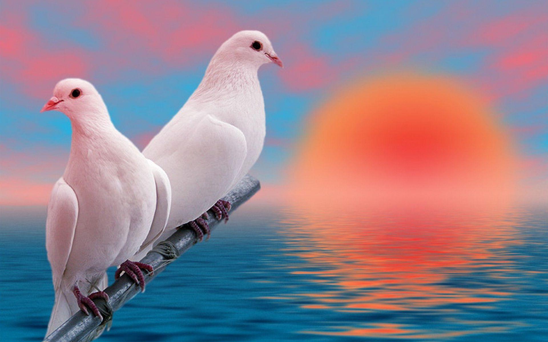 Mobile Phone Wallpapers Love Birds Wallpaper Cave