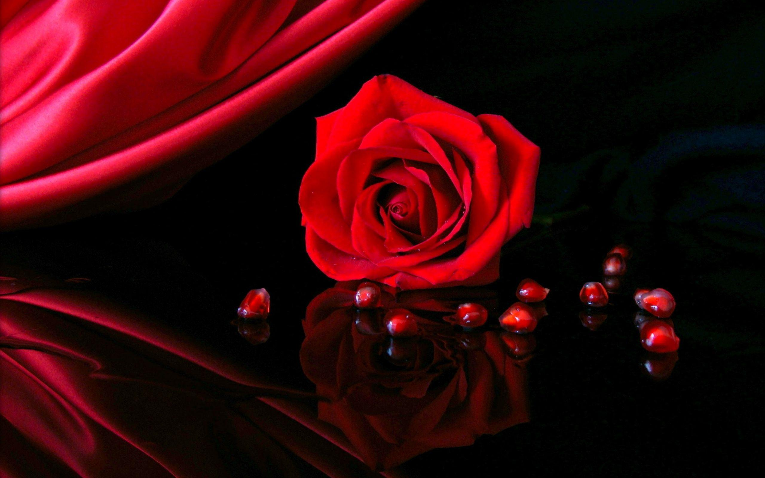 Red Rose Wallpapers Hd Wallpaper Cave