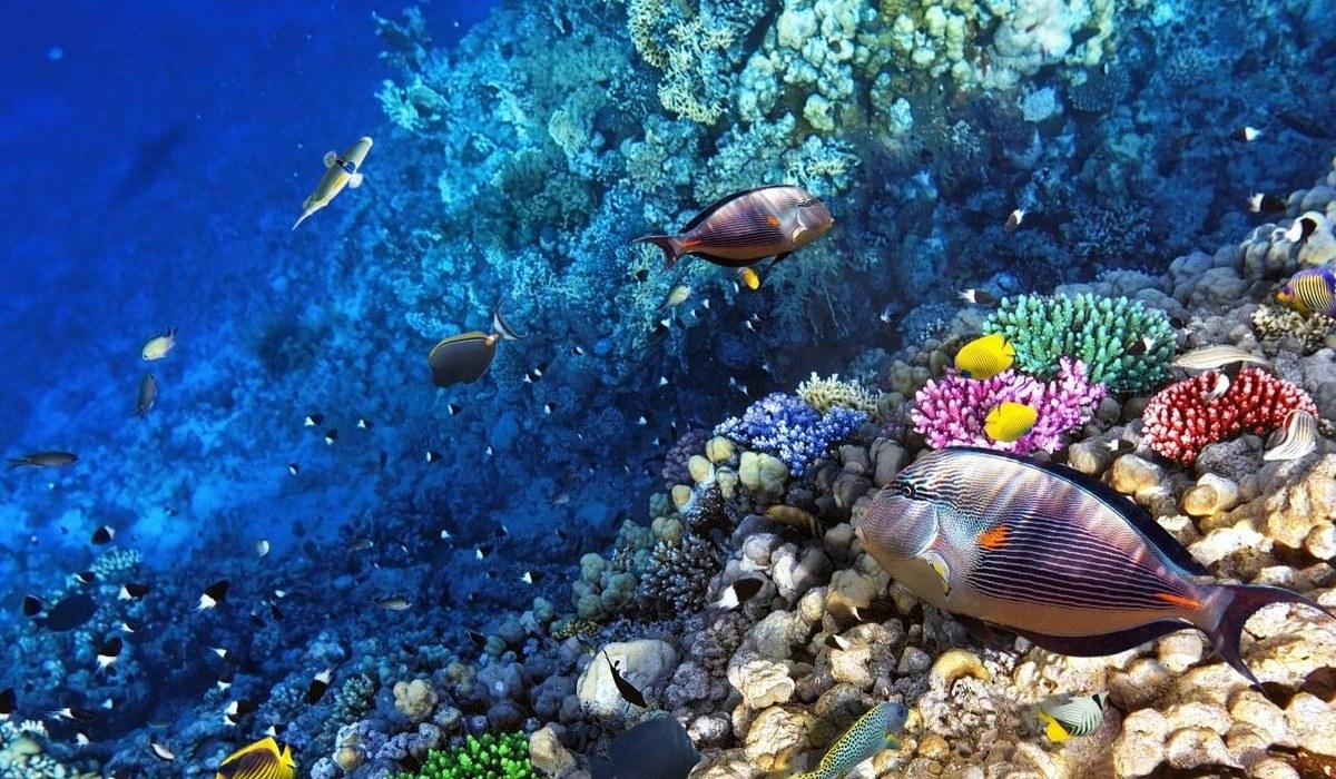 Great Barrier Reef Marine Park Wallpapers Wallpaper Cave
