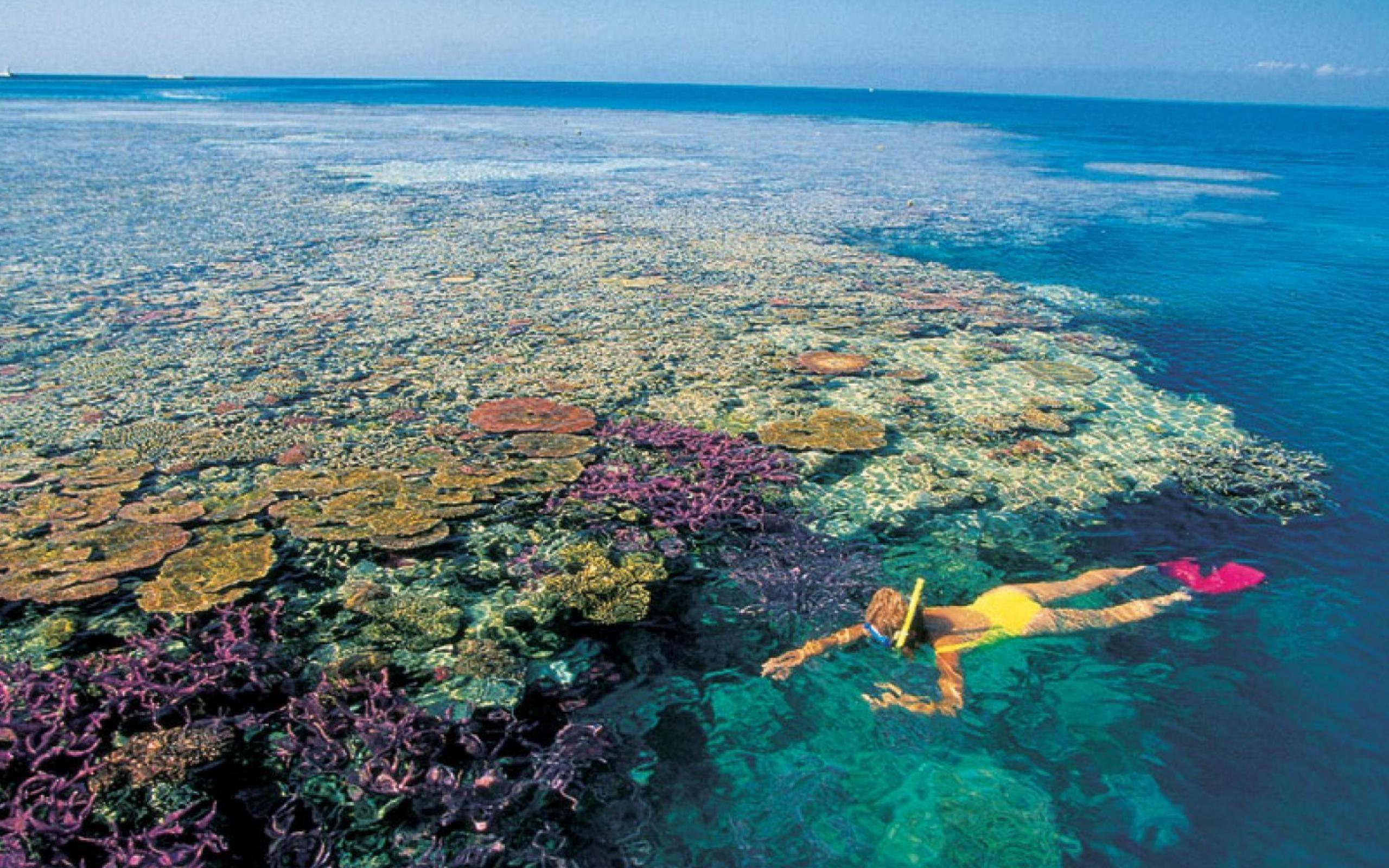 Great barrier reef marine park wallpapers wallpaper cave - Great barrier reef desktop background ...