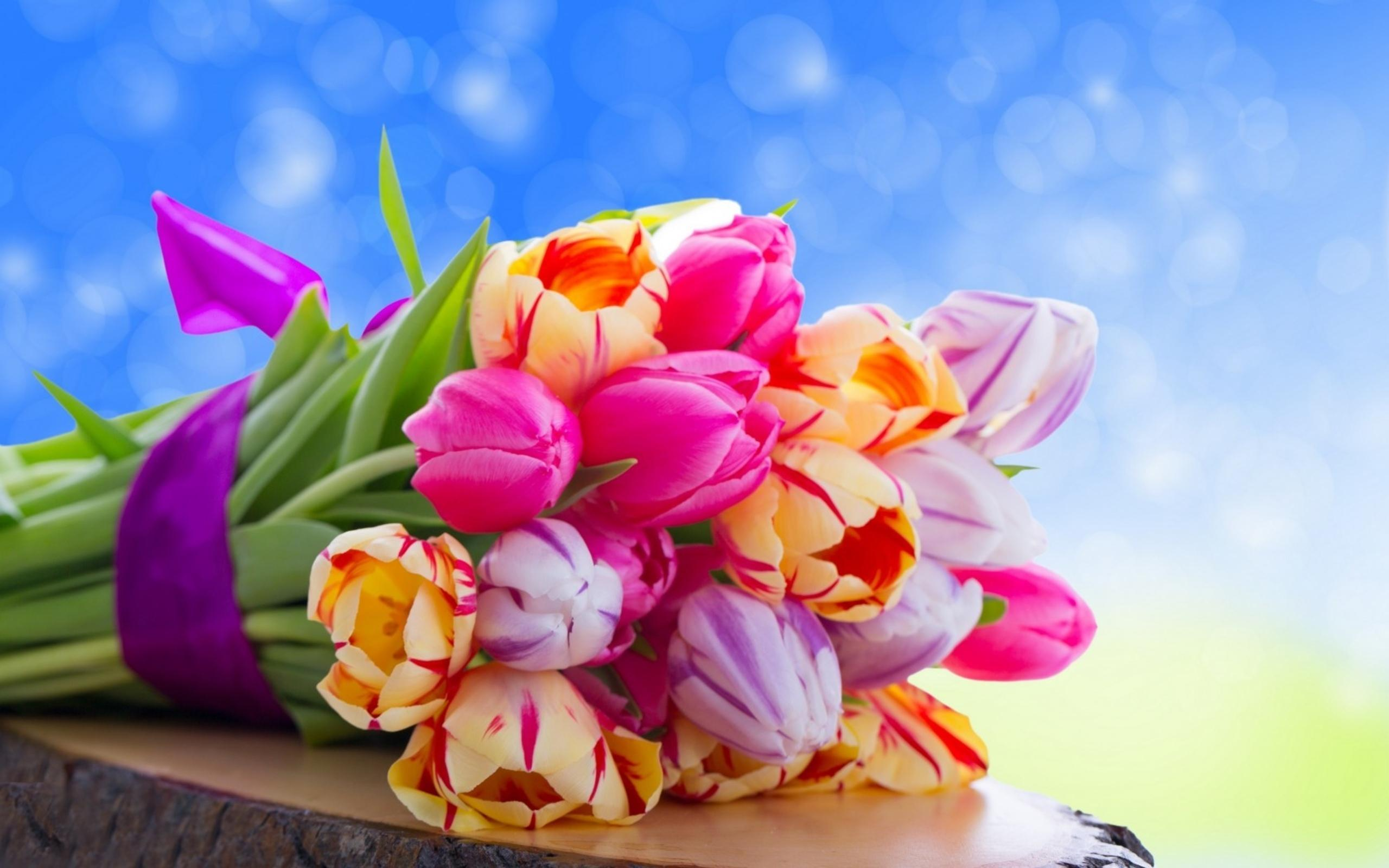 Free Colorful Flower Wallpaper Downloads: Beautiful Colorful Flowers Wallpapers