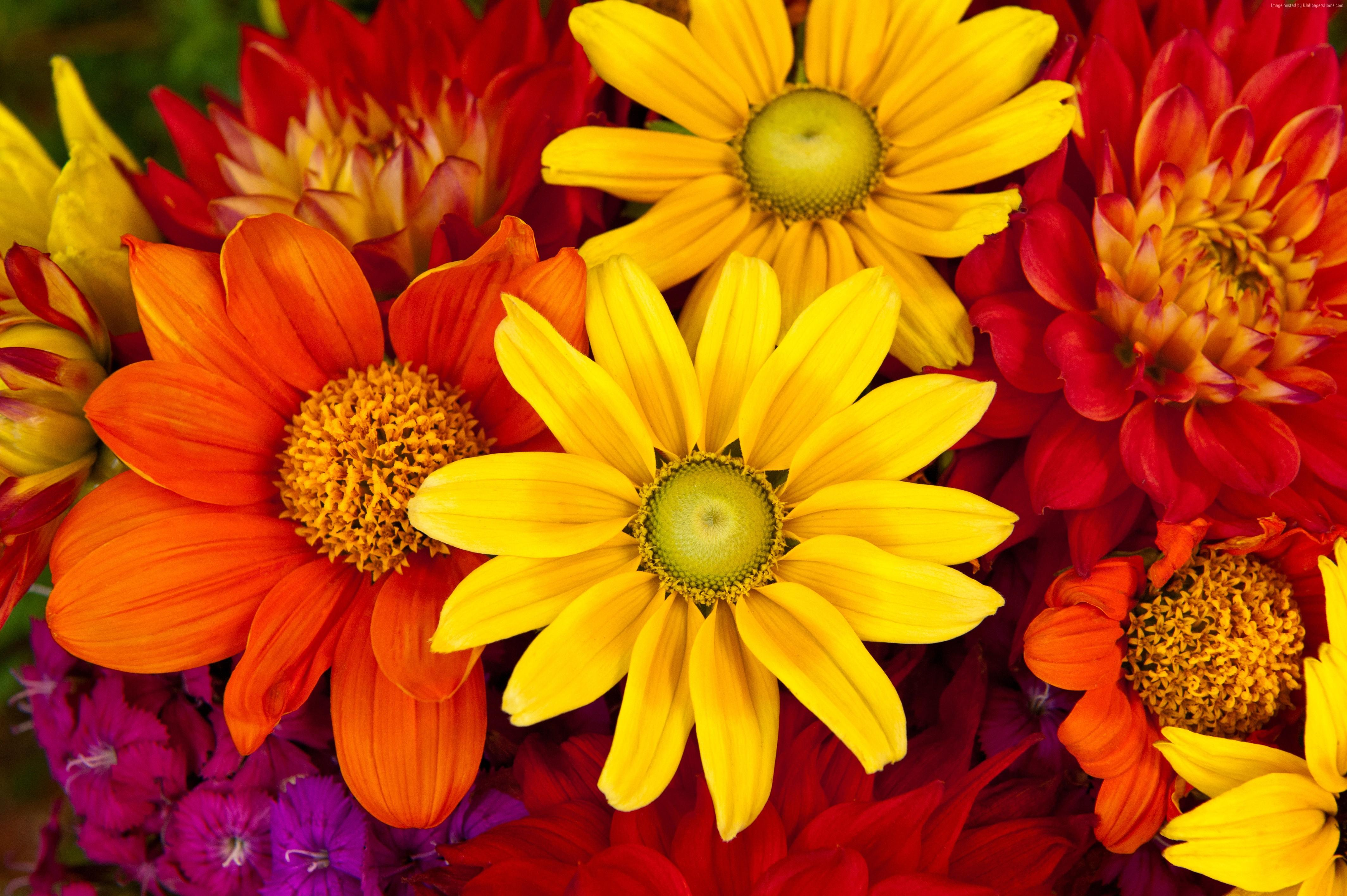 Colourful Flower Wallpapers , Wallpaper Cave