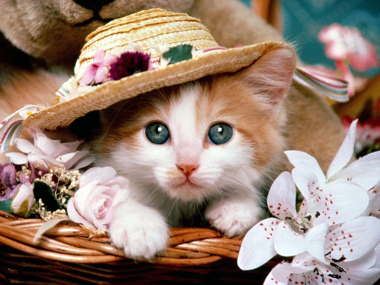 Cute Cat Wallpapers for Desktop (66+ images) |Cute Cat Backgrounds