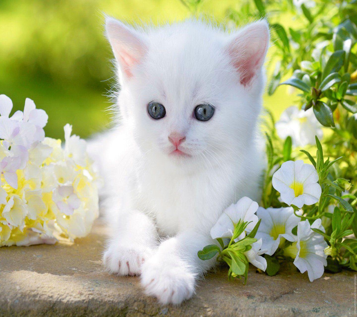 Cute Baby Cats Wallpapers , Wallpaper Cave
