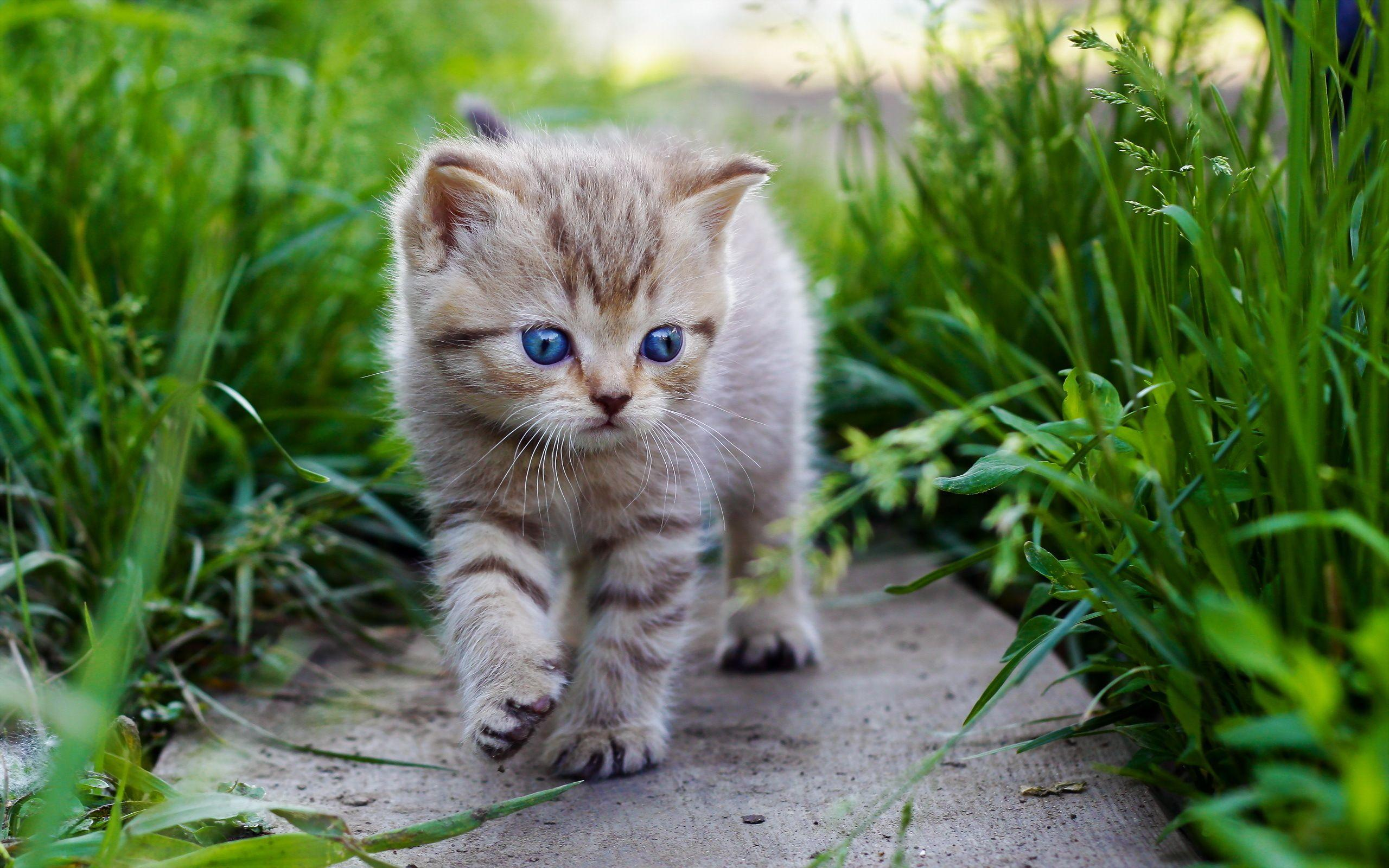 Cute baby cats wallpapers wallpaper cave - Baby kitten backgrounds ...