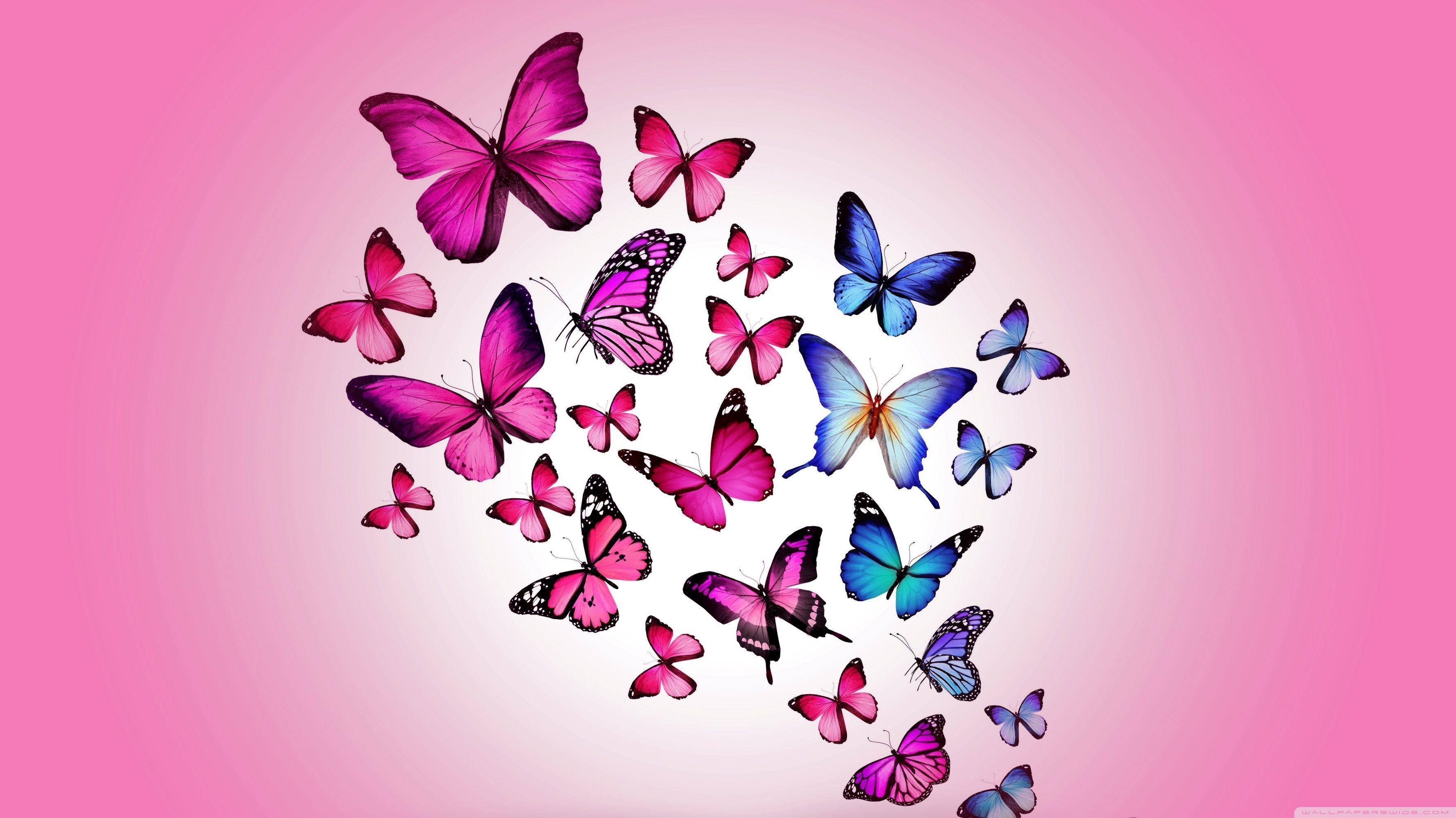 Butterfly Pictures Wallpapers Wallpaper Cave