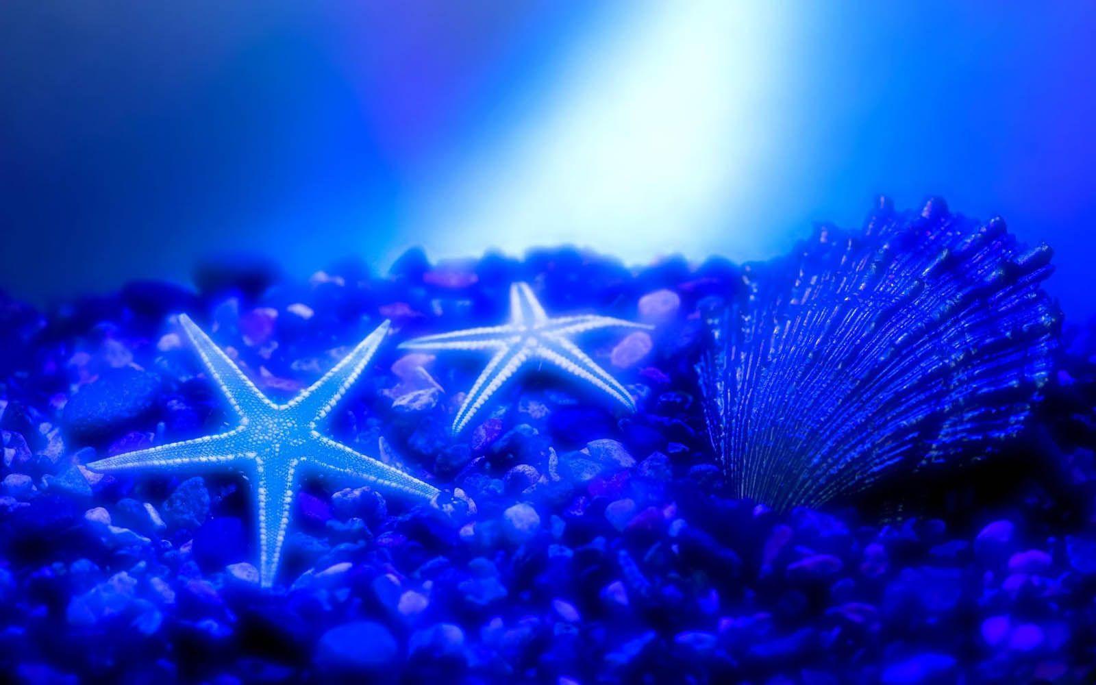 Bintang Laut Wallpapers Advan Wallpaper Cave