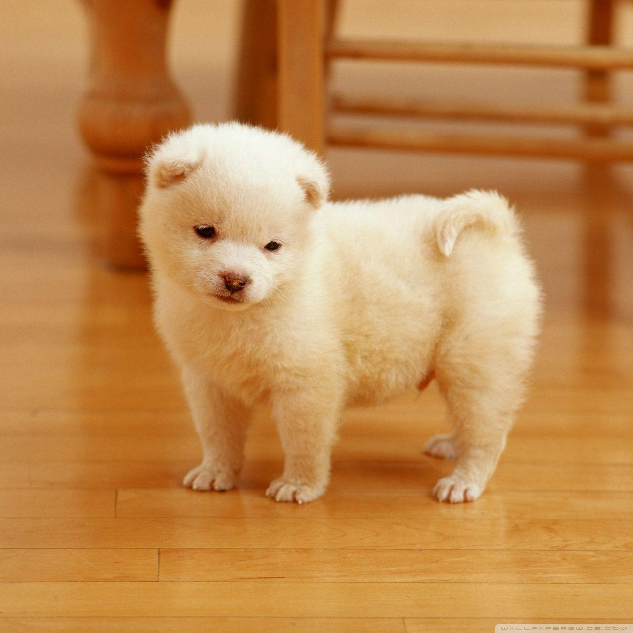 . Cute Puppies Wallpapers For Mobile   Wallpaper Cave