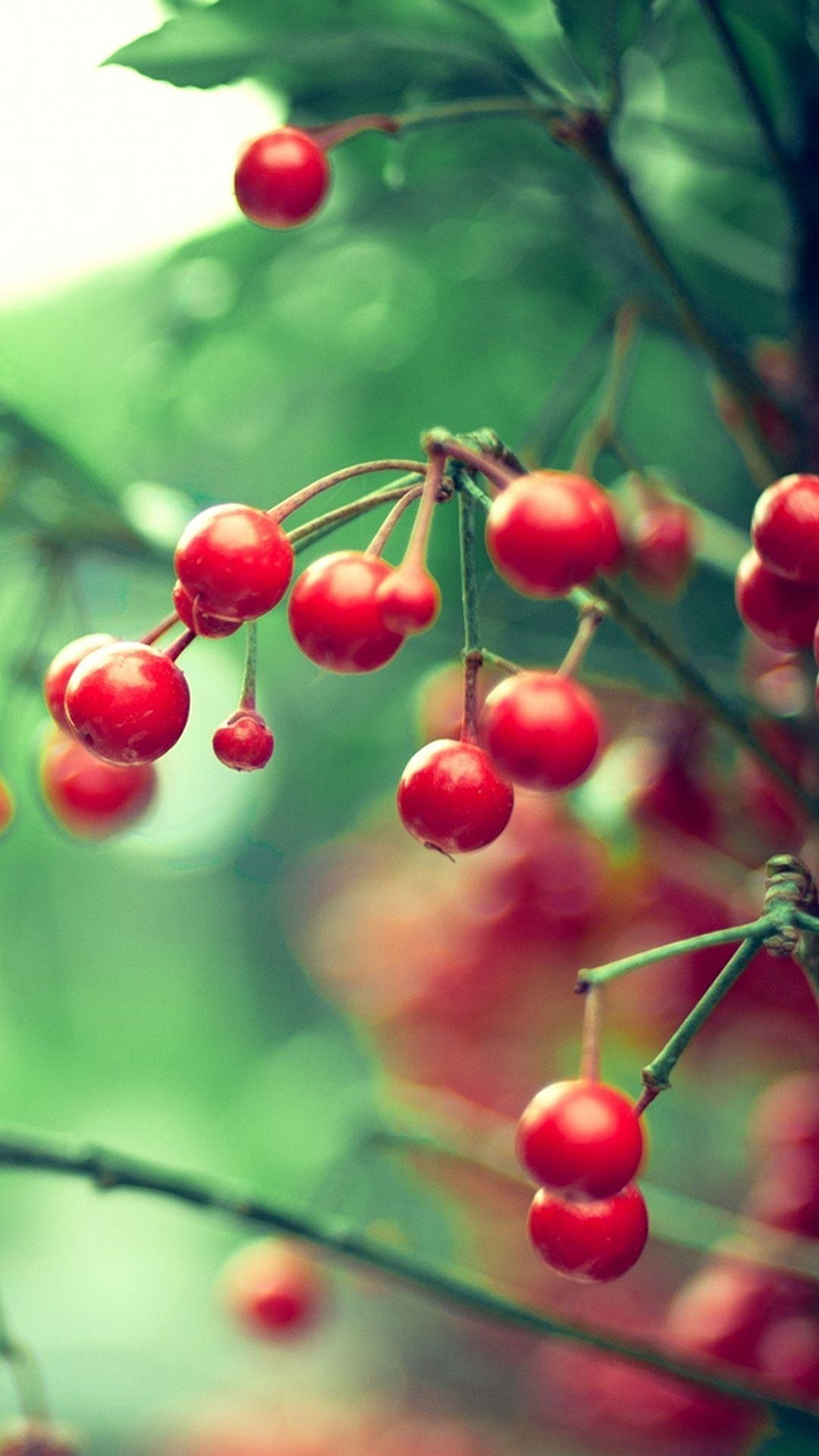 Nature Samsung Galaxy S5 Cherry Smartphone Wallpapers HD ⋆ GetPhotos