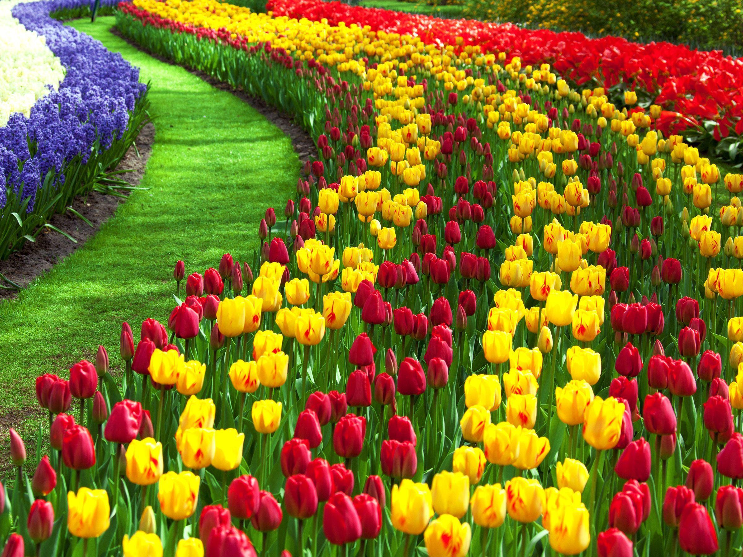 Flowers Wallpapers For Desktop Backgrounds Full Screen Wallpaper Cave