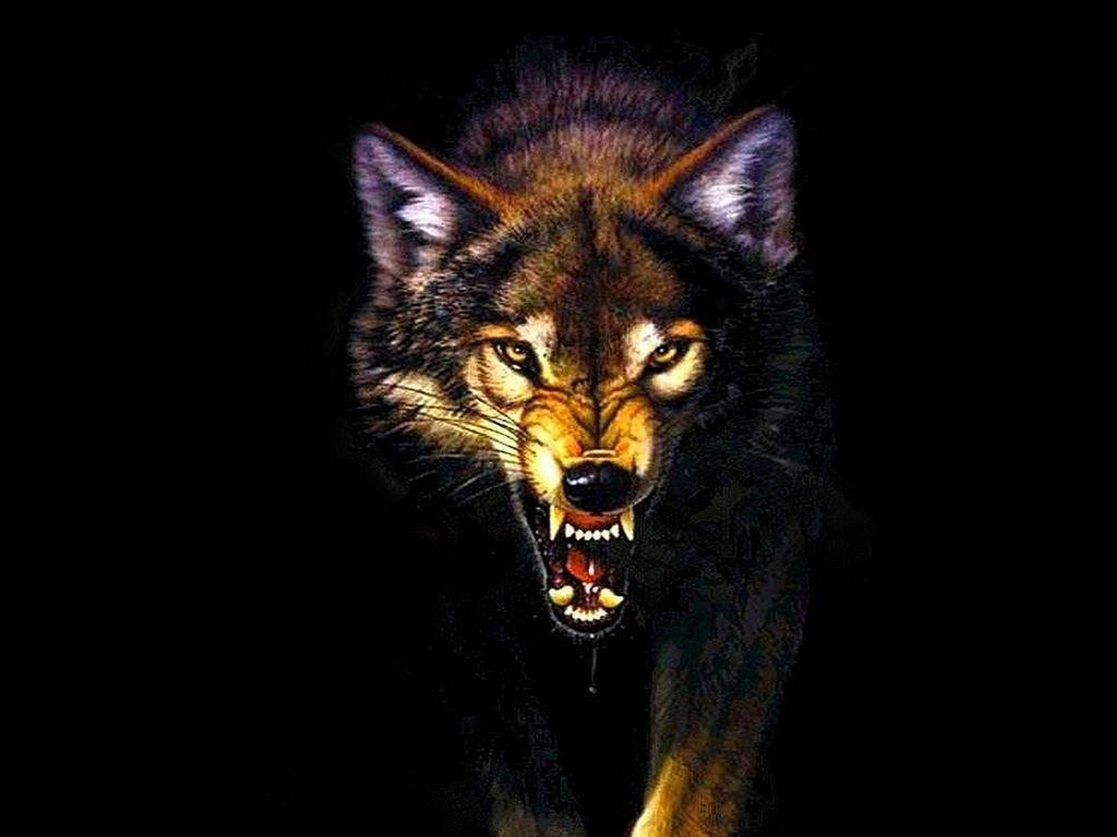 Angry Wolf Wallpapers HD