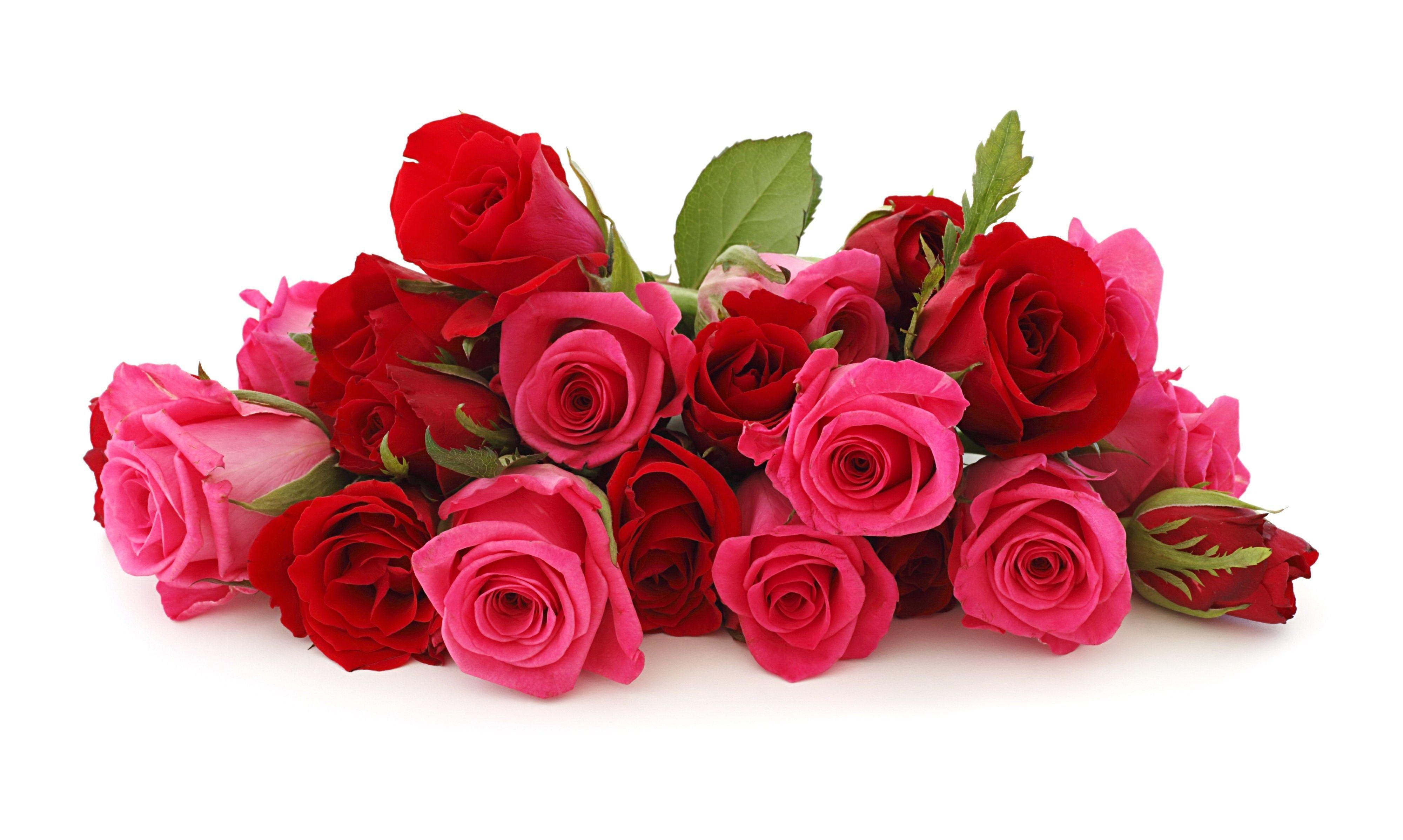 Beautiful Rose Flowers Wallpapers Wallpaper Cave