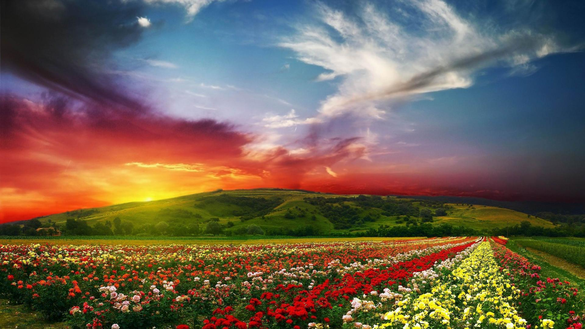 rose flower garden wallpapers - wallpaper cave