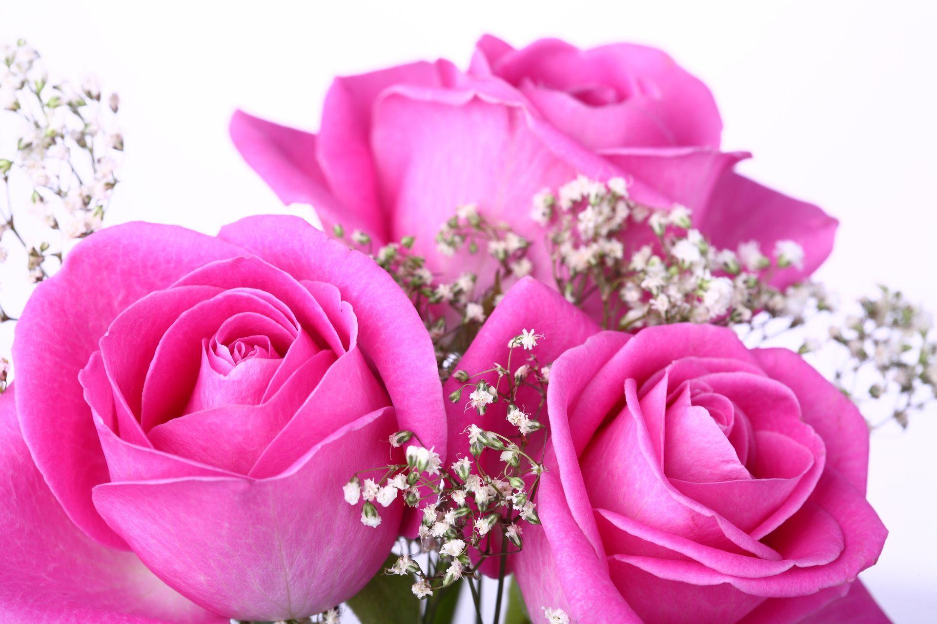 Beautiful Pink Roses Wallpapers For Desktop - Wallpaper Cave