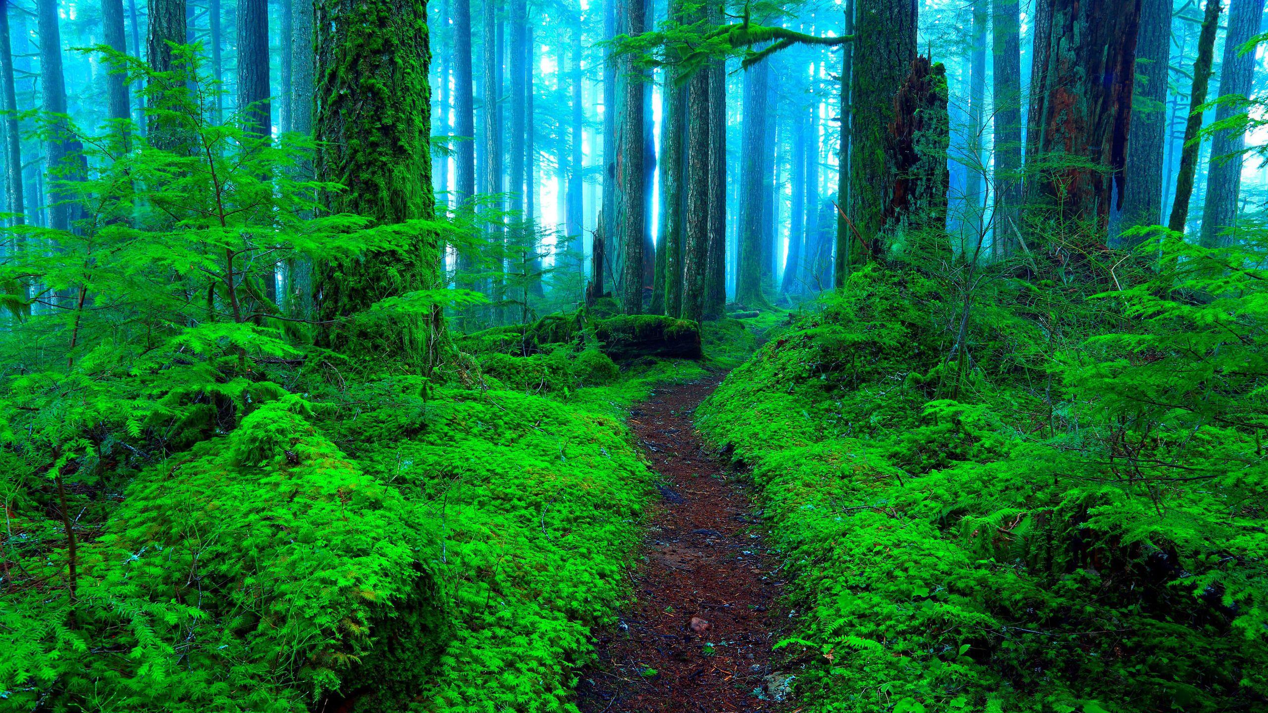 Обои На Рабочий Стол Природа Лес
