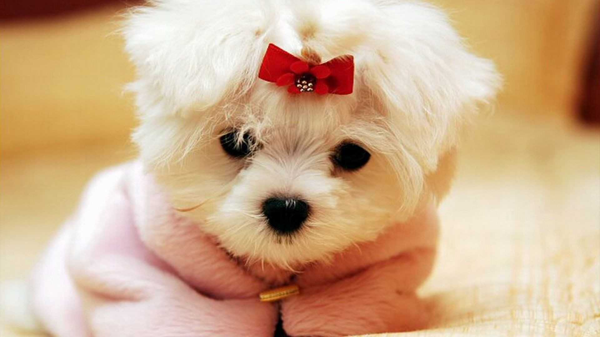 Cute Dogs And Puppies Wallpapers For Mobile Wallpaper Cave