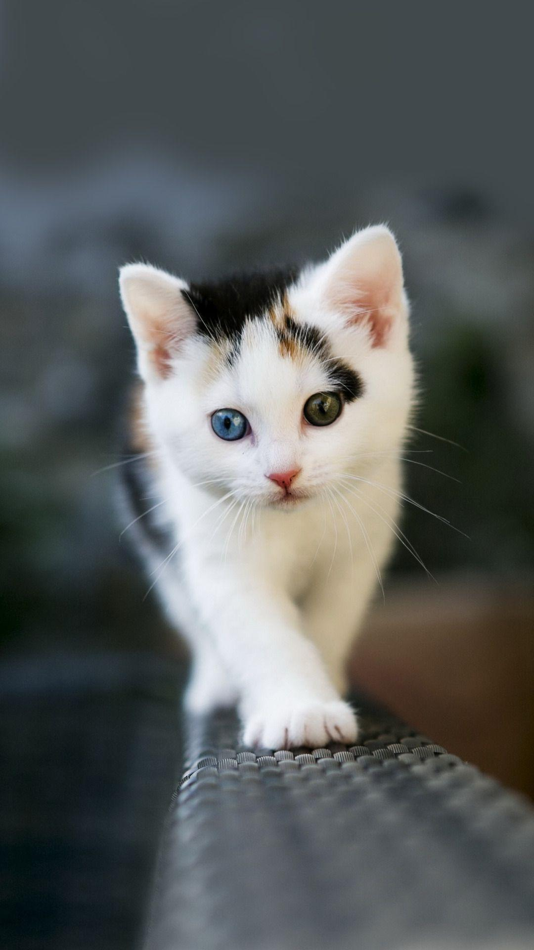 Cute Kittens Wallpapers For Mobile Wallpaper Cave