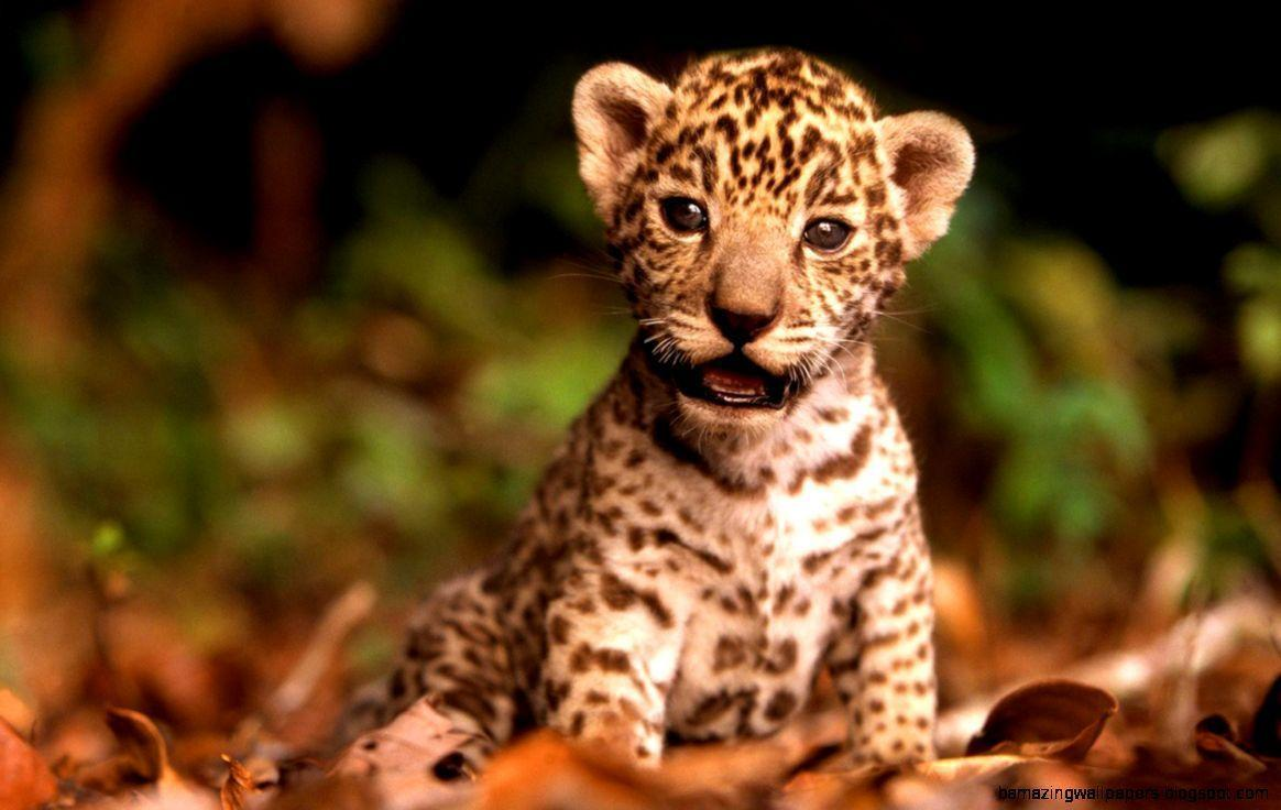 cute baby wild animals wallpapers wallpaper cave