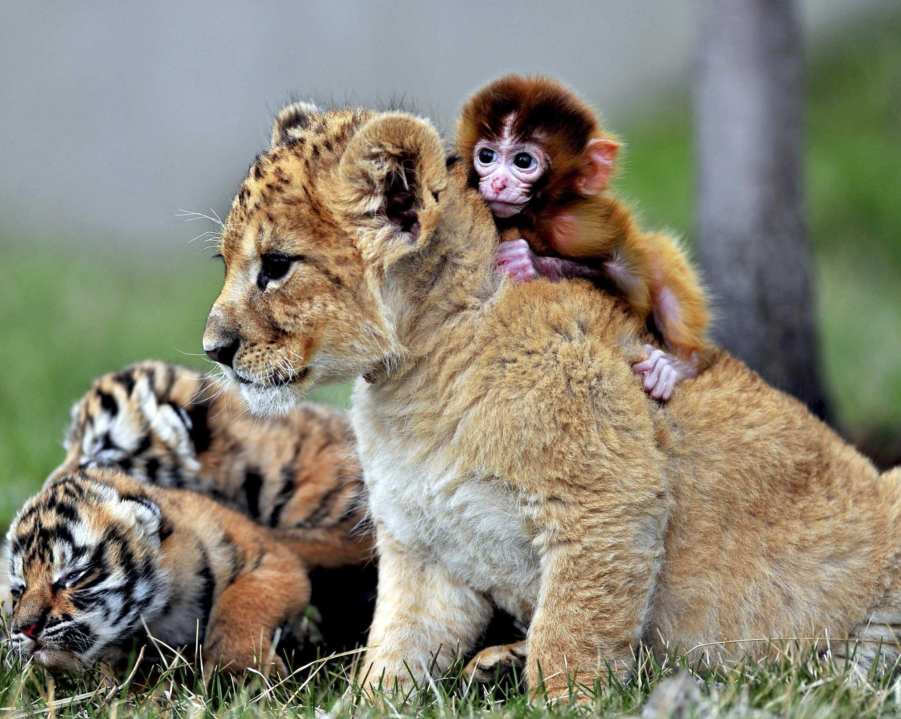 Cute baby wild animals wallpapers wallpaper cave - Cute baby animal desktop backgrounds ...