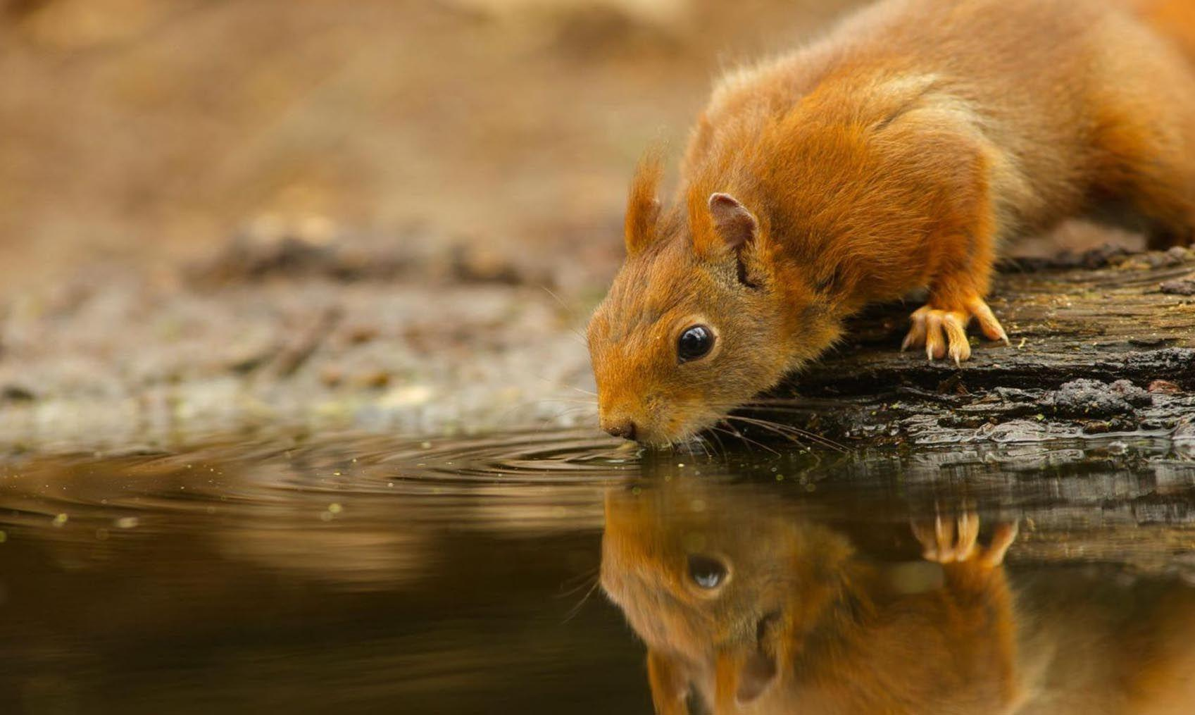 Cute Baby Wild Animals Wallpapers - Wallpaper Cave