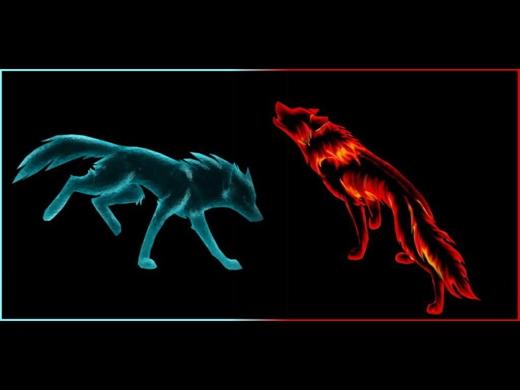 Red Wolf Wallpapers Wallpaper Cave