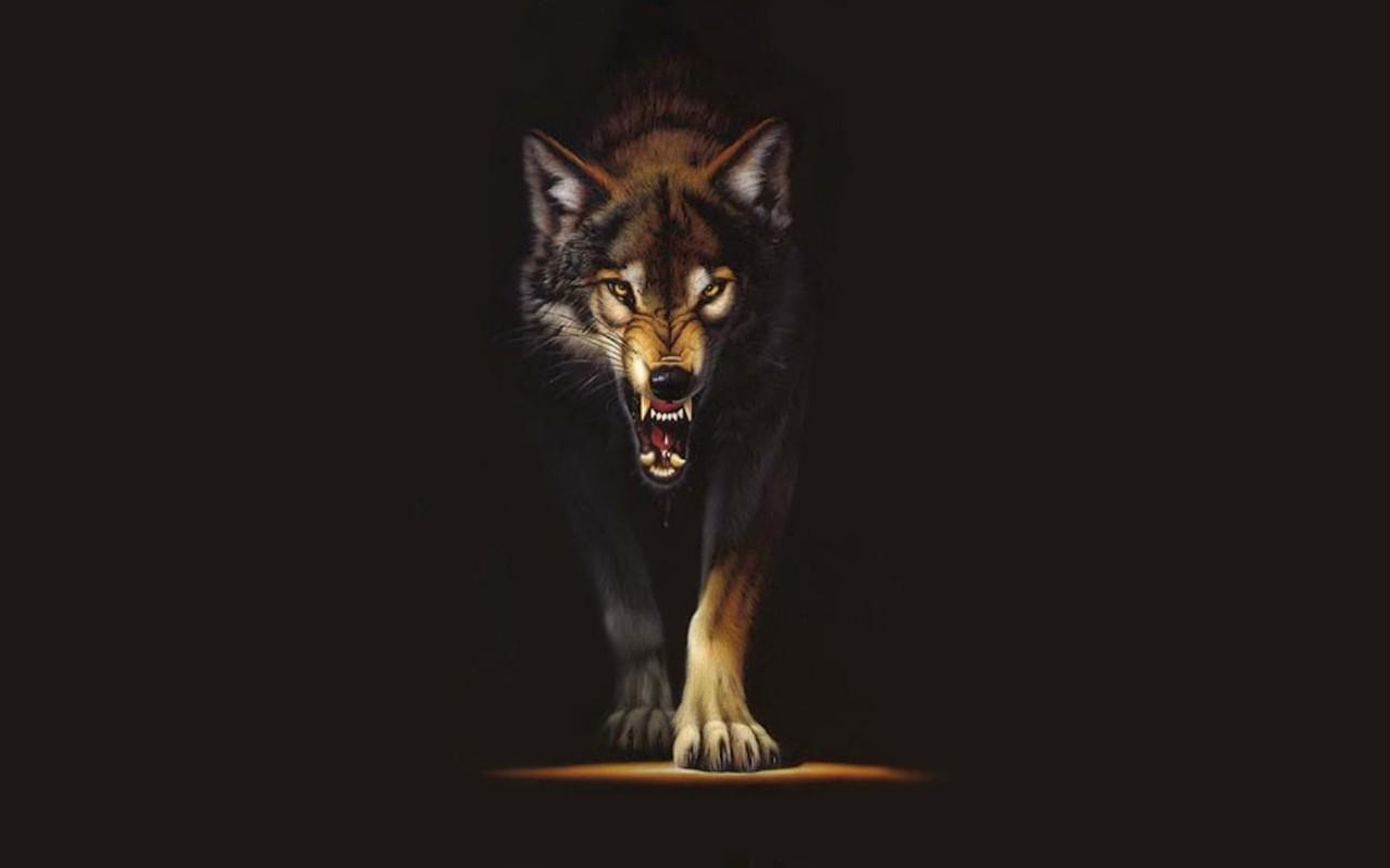 Red Wolf Wallpapers - Wallpaper Cave