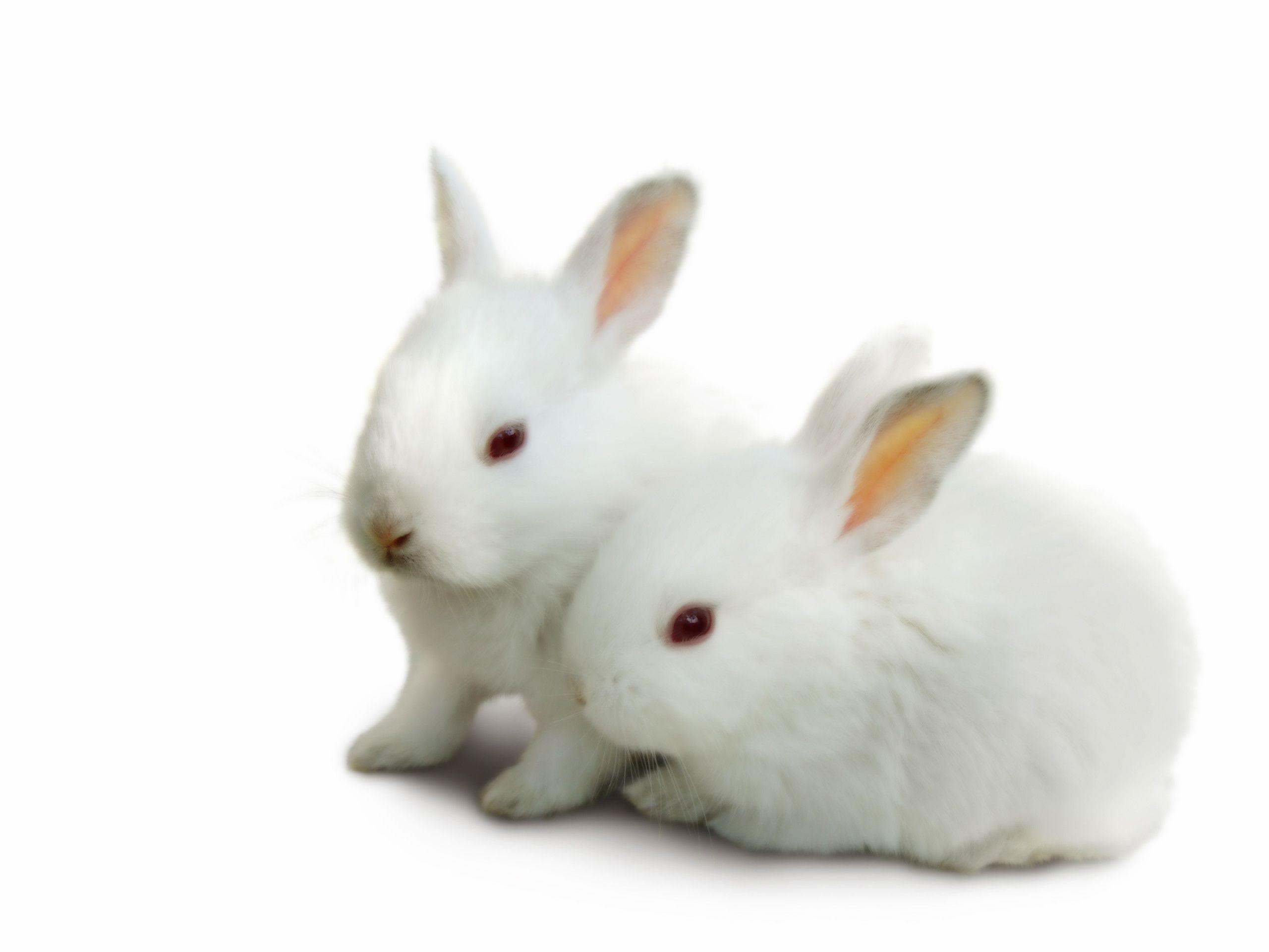 Cute White Baby Rabbit Wallpapers - Wallpaper Cave