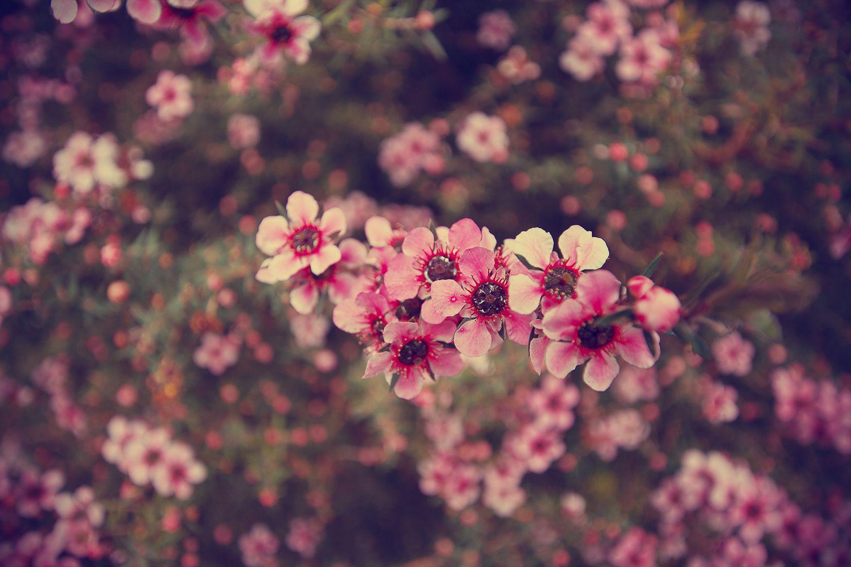 Backgrounds Tumblr Flower Vintage Wallpaper Cave