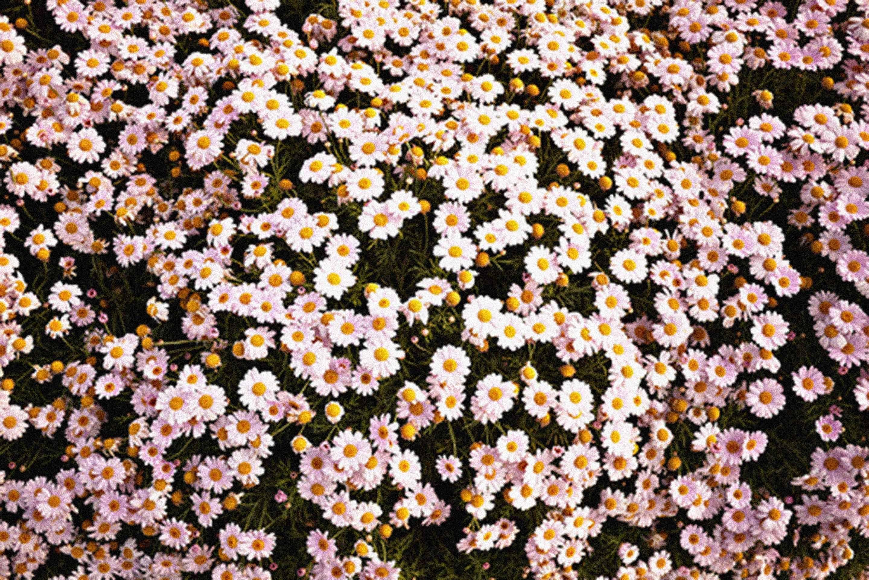 Wallpapers Flower Tumblr Wallpaper Cave